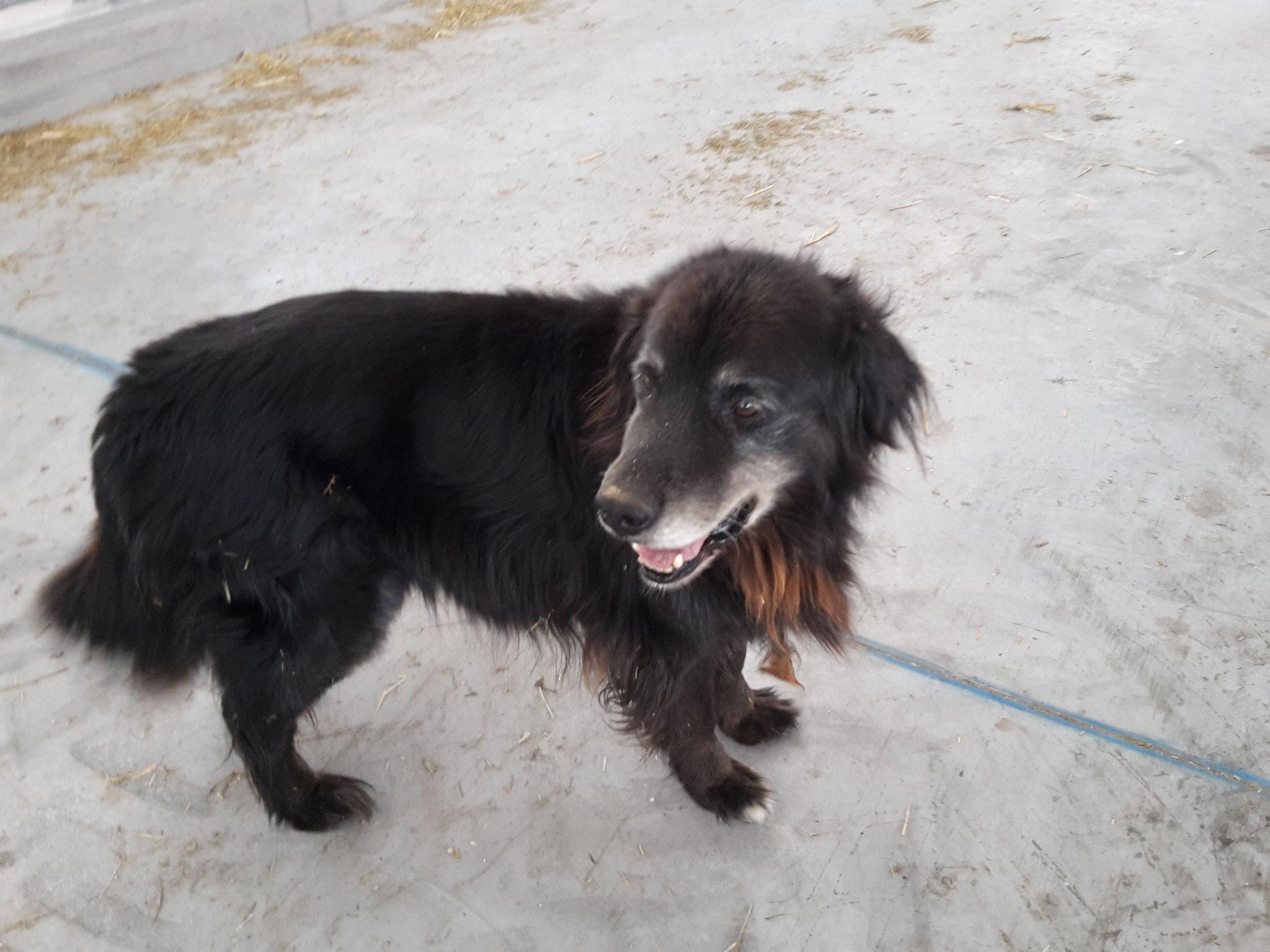 Unser alter Hofhund Leo
