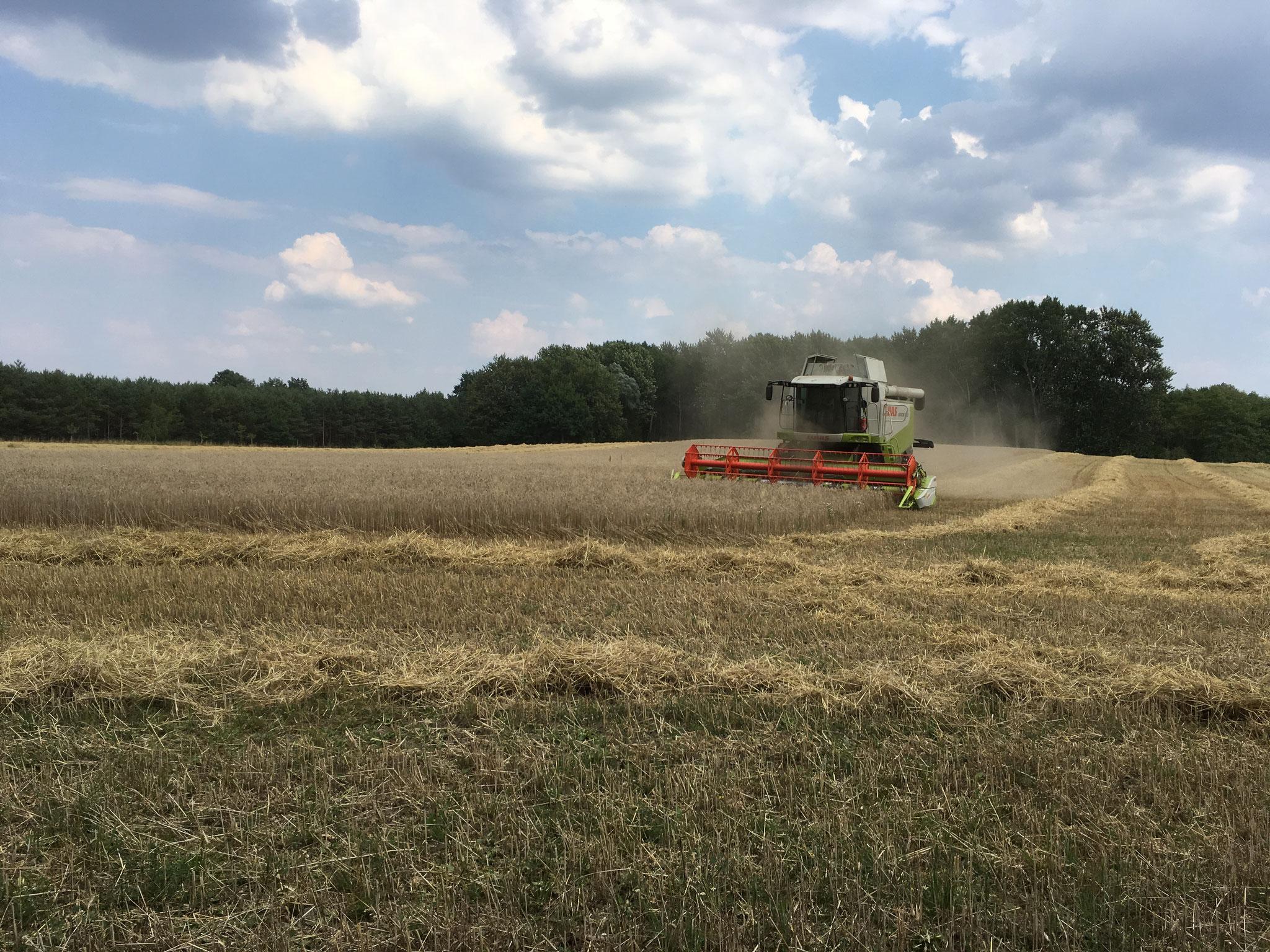 Die Getreideernte konnten wir bei bestem Wetter einfahren