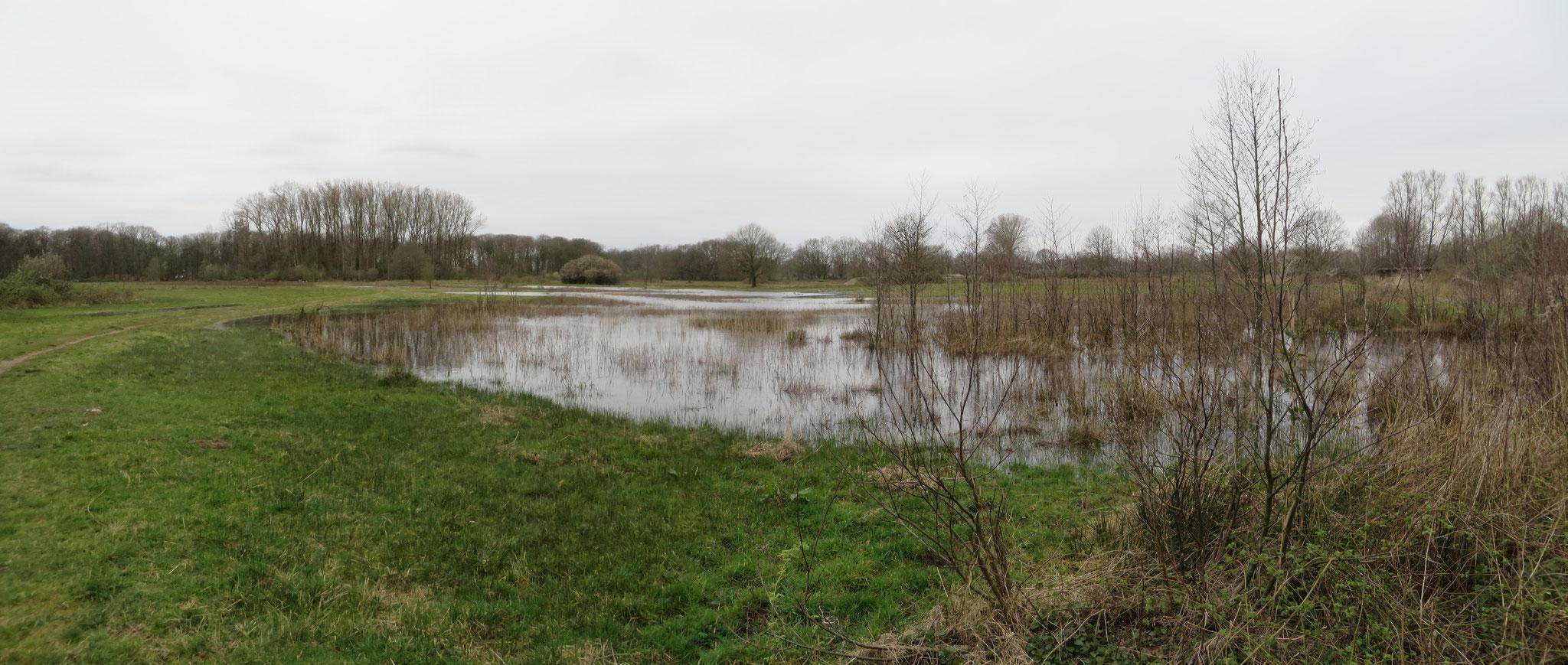 Op 20-3-2020 staat het water tot aan het wandelpad en vormt als het ware een grote plas.