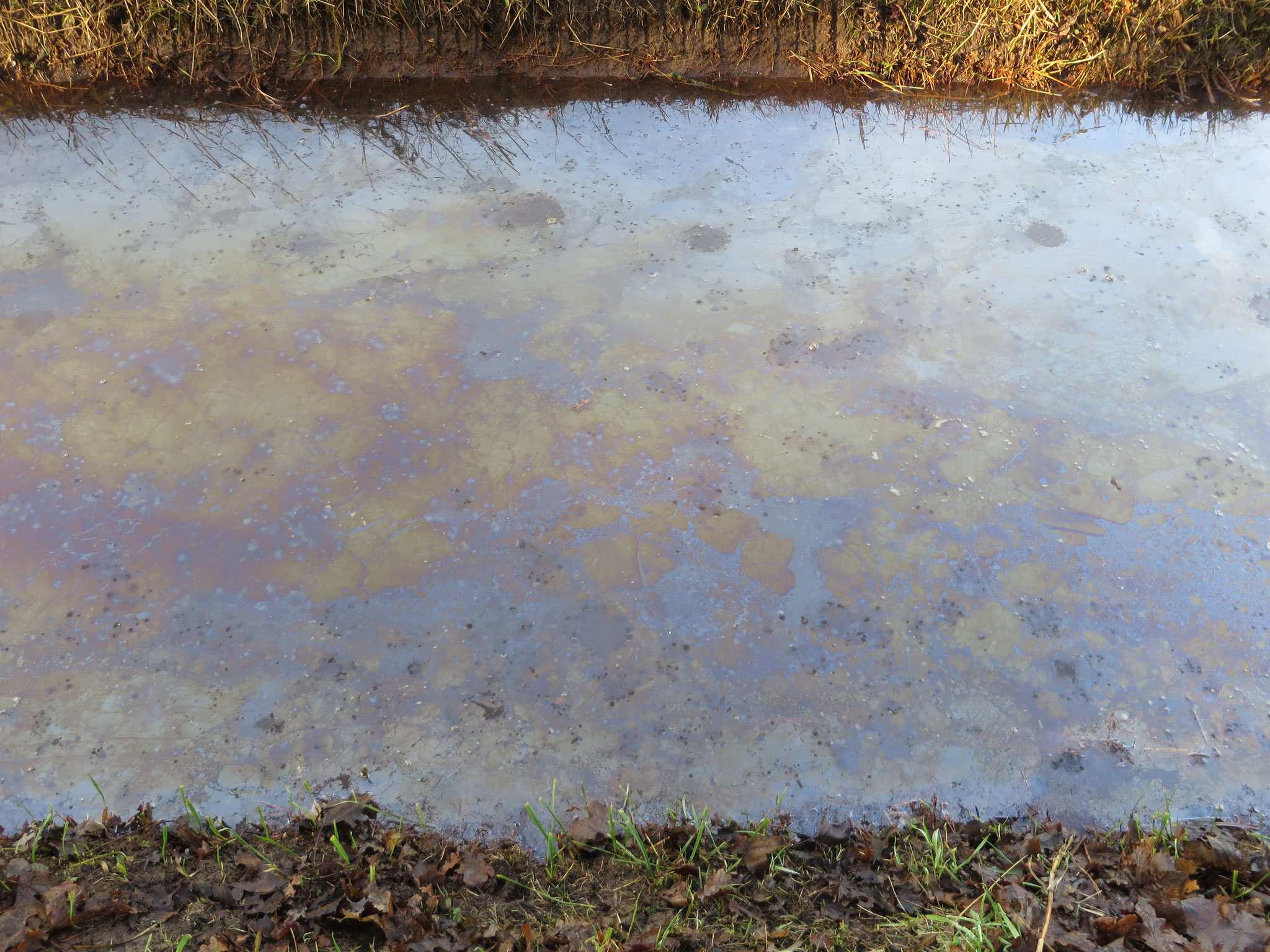Kleurenpatroon van ijzerbacteriën. De verschillende kleuren ontstaan door de verschillende lichtinval en samenstelling van de laag bacteriën.