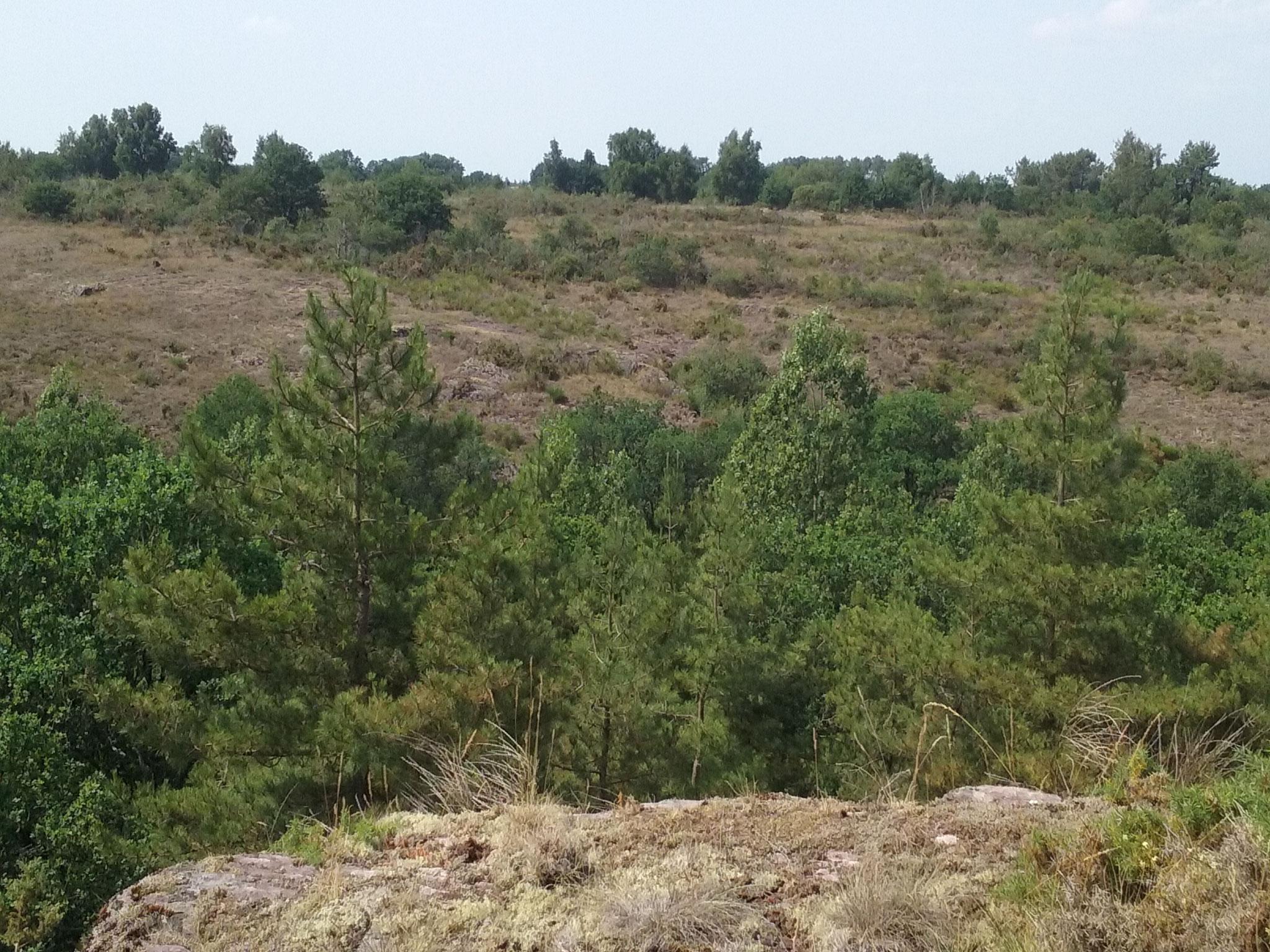 Vue des landes sèches et affleurements rocheux de l'ENS Vallée du Canut