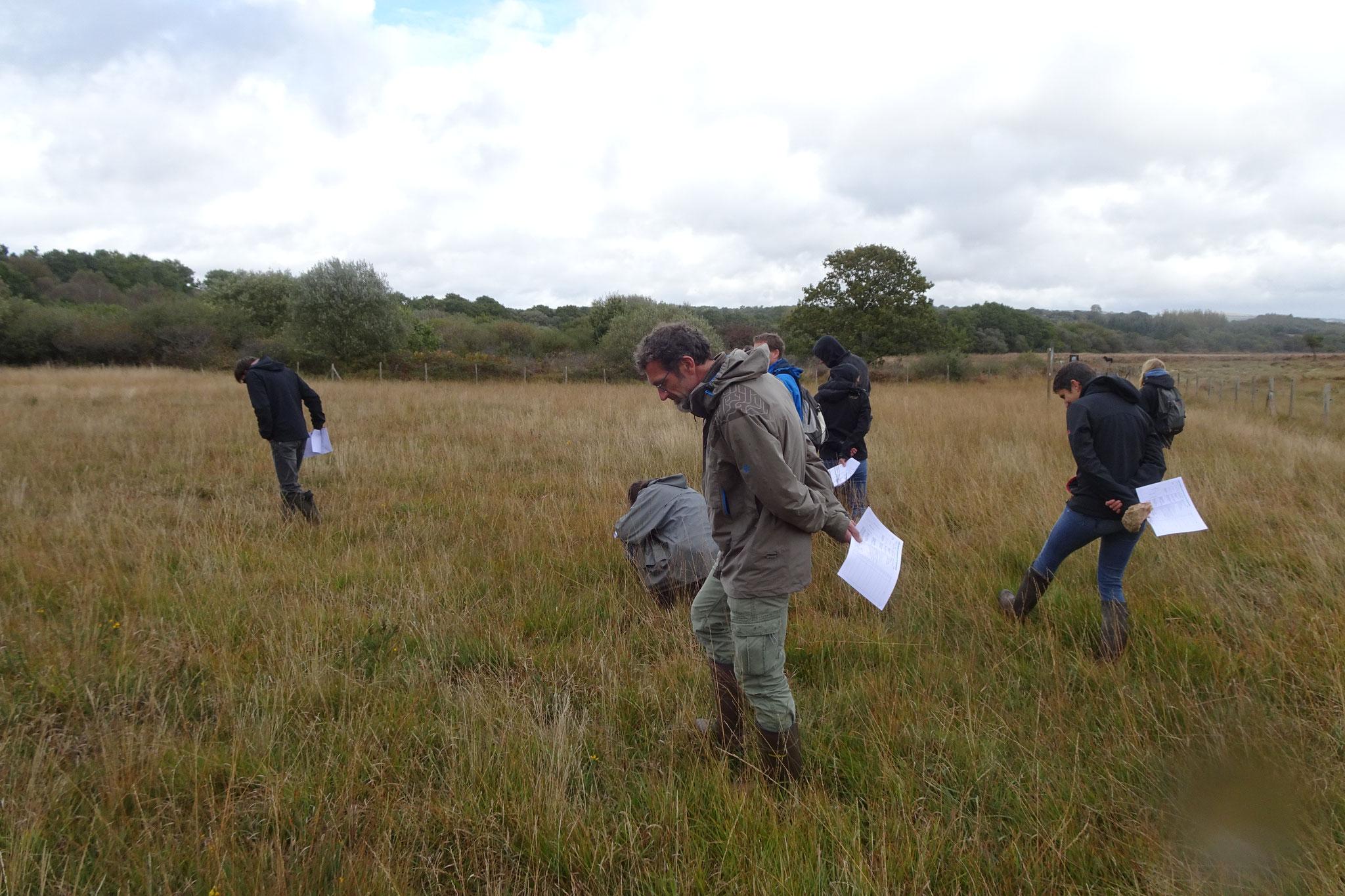 """Recherche des espèces indicatrices et compagnes de la grille """"landes humides"""""""