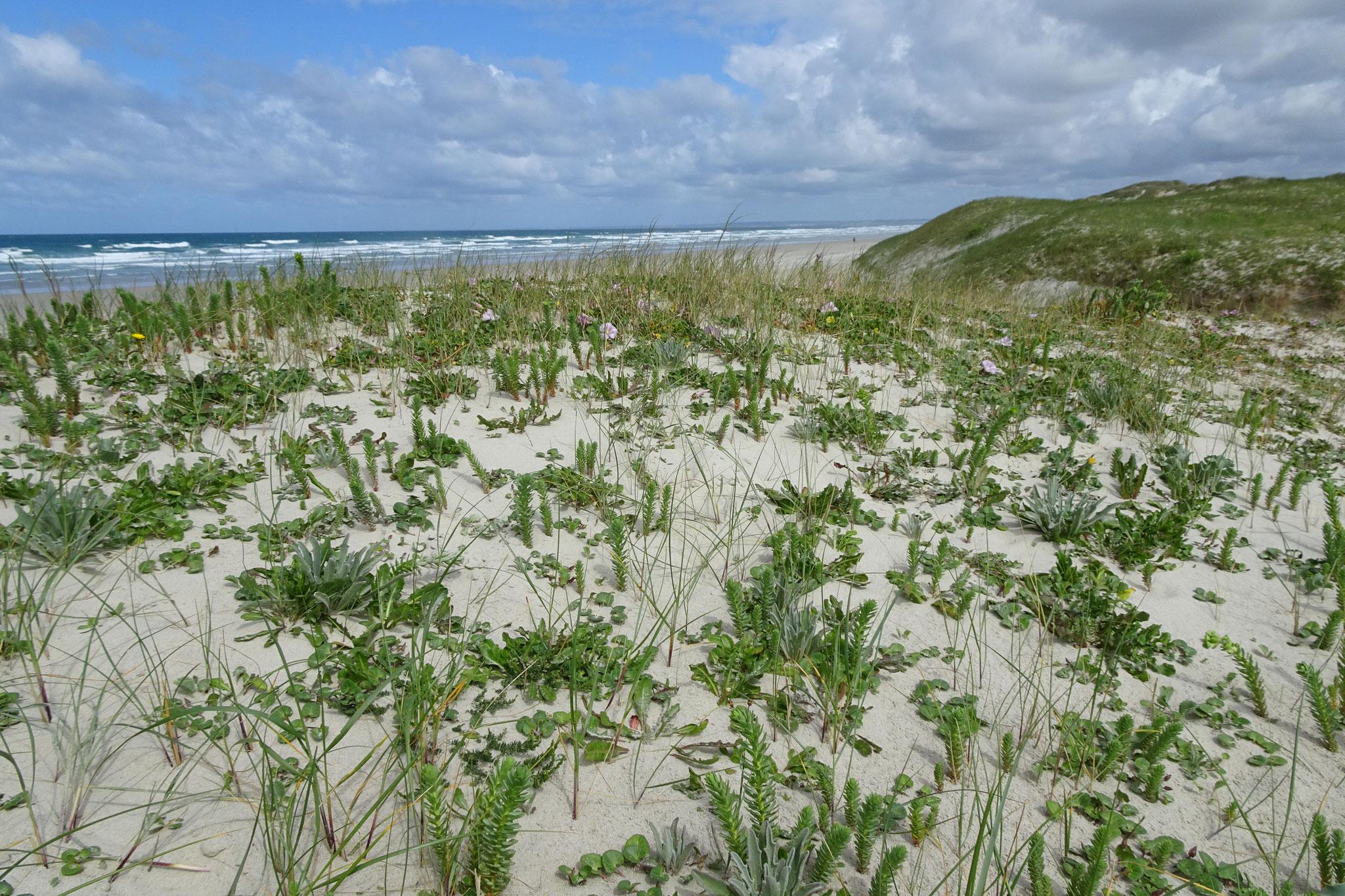 Arrêt sur la dune mobile