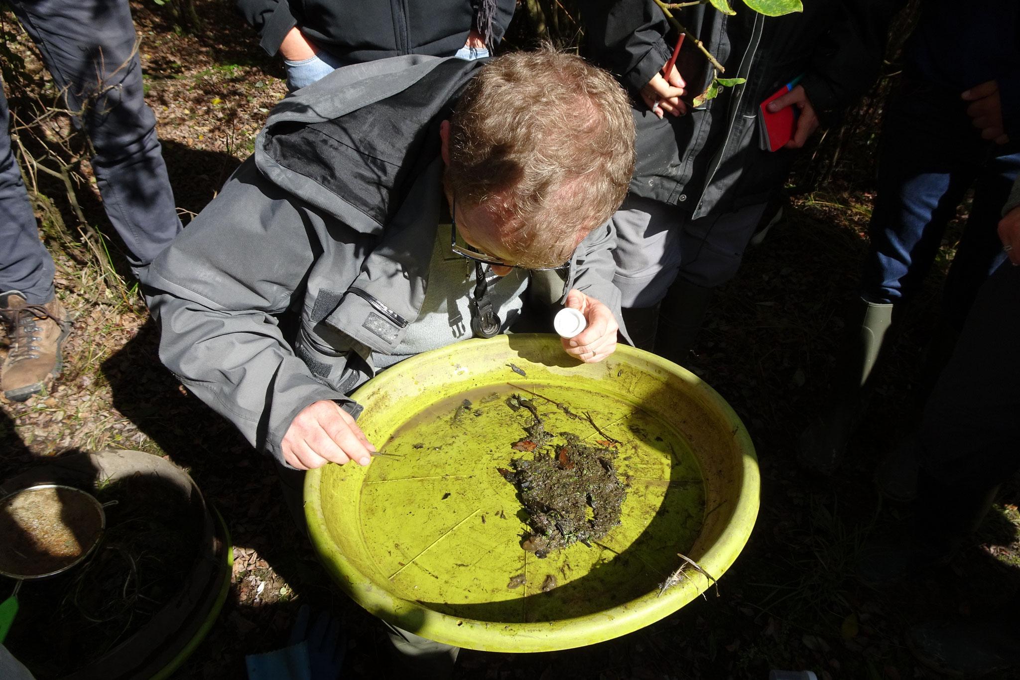 IcoCAM : phase de tri et de collecte des coléoptères aquatiques