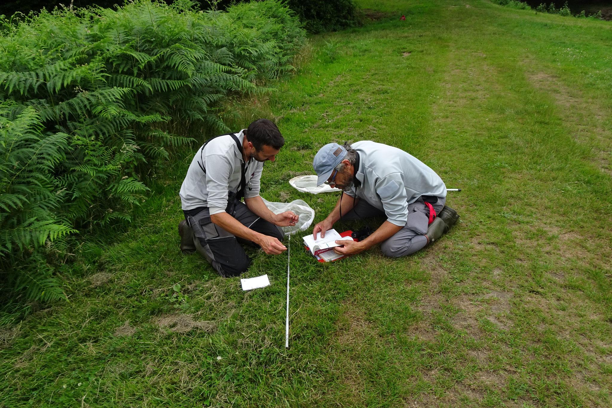 Capture et identification par petits groupes