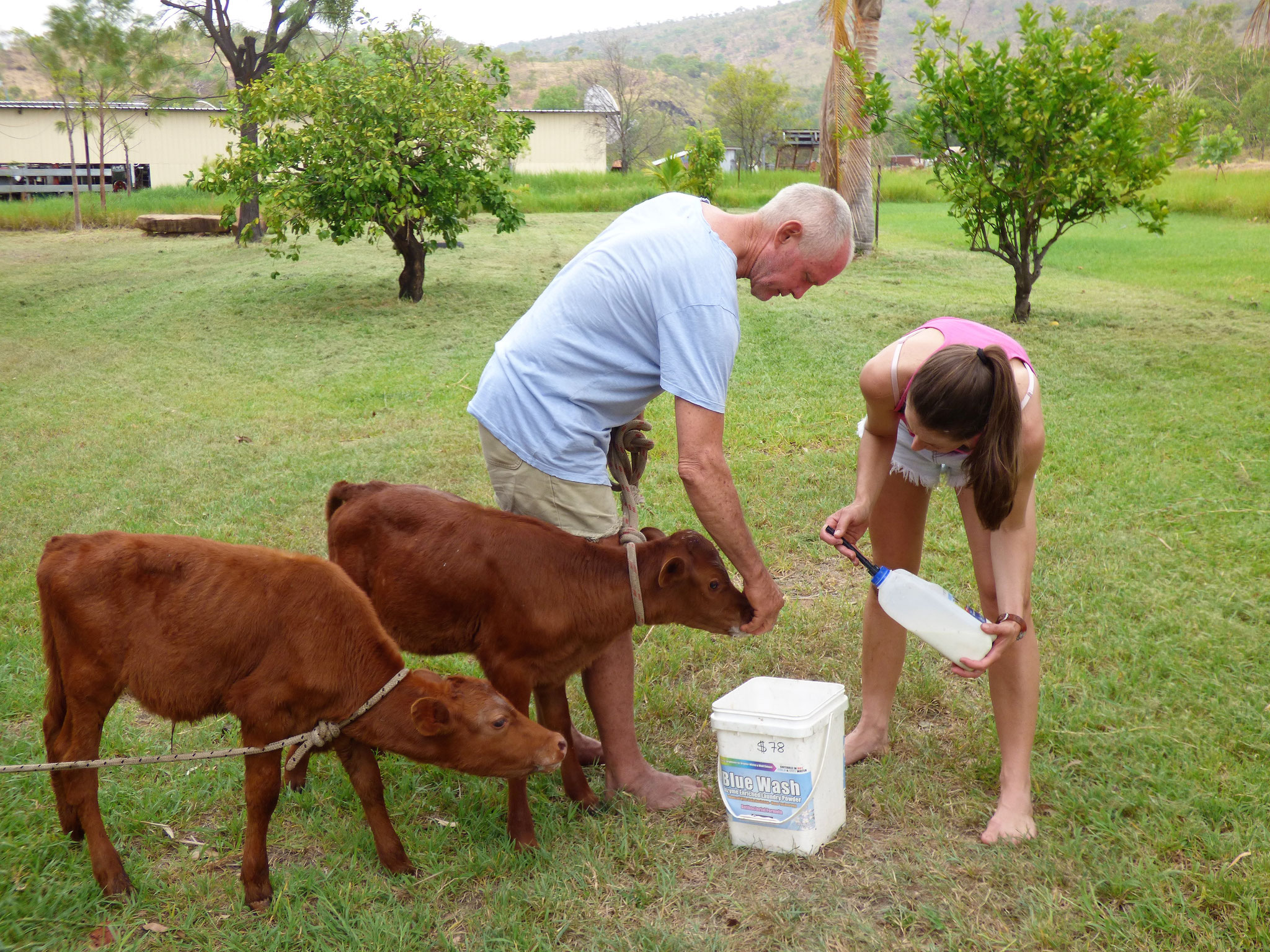 Teaching orphans to drink from a bucket