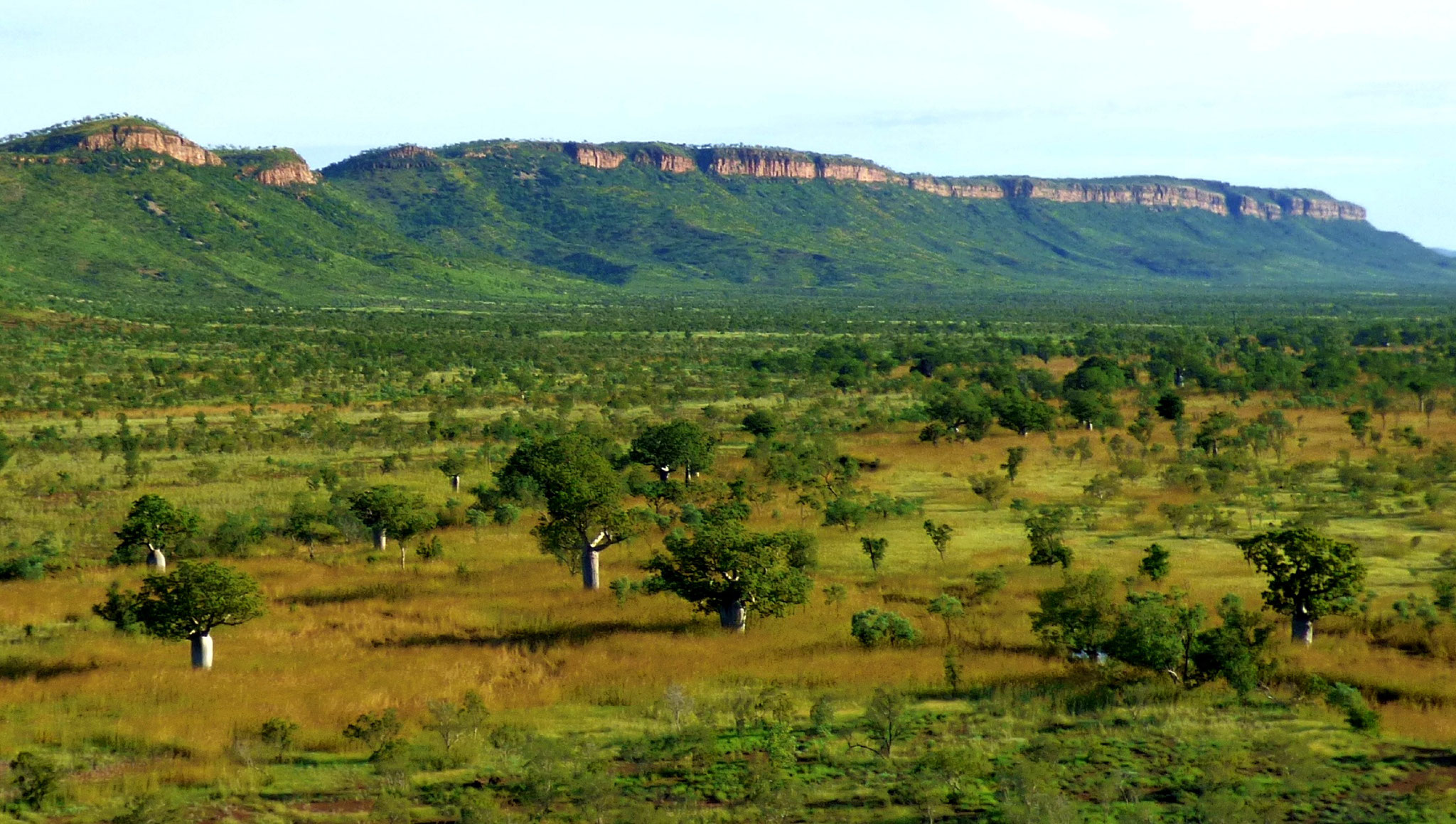 Can we rebuild healthy and resilient savannas?