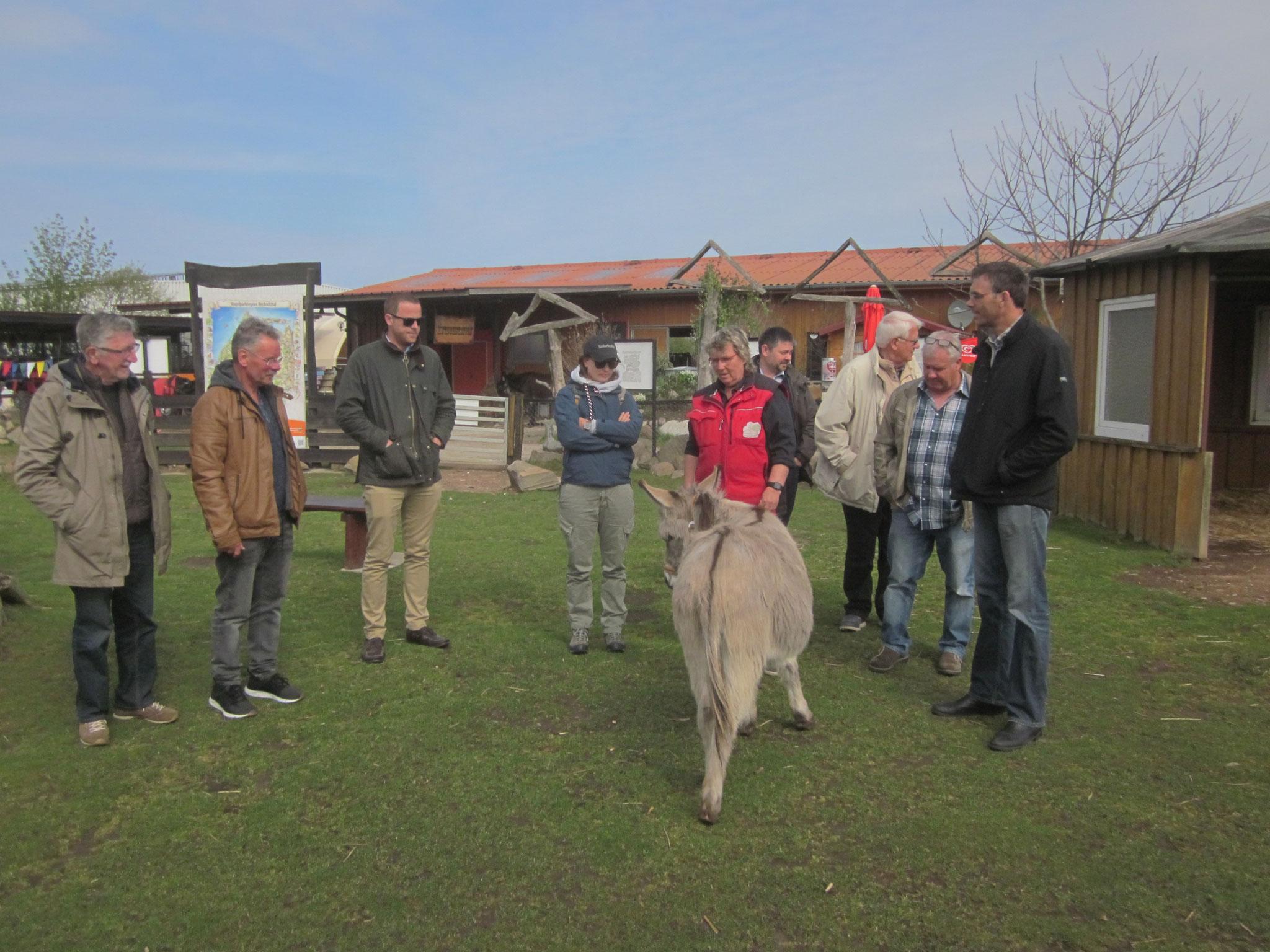 Wir besuchen einen Eselhof.