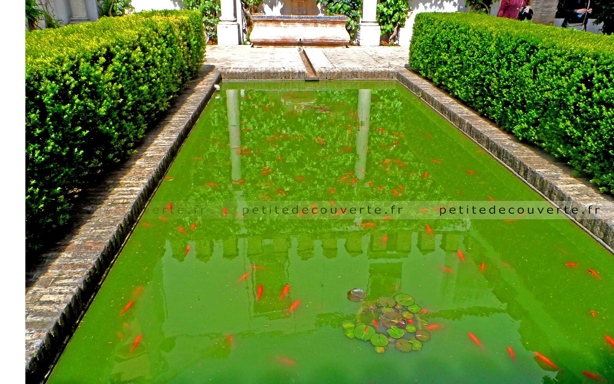 Real Alcázar - Alcazar Royal - Séville