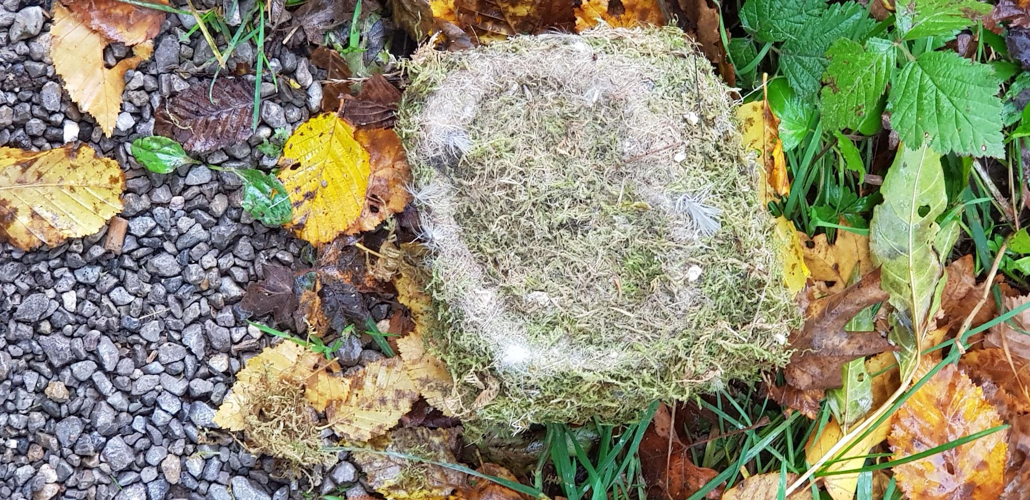Ausgedientes Nest