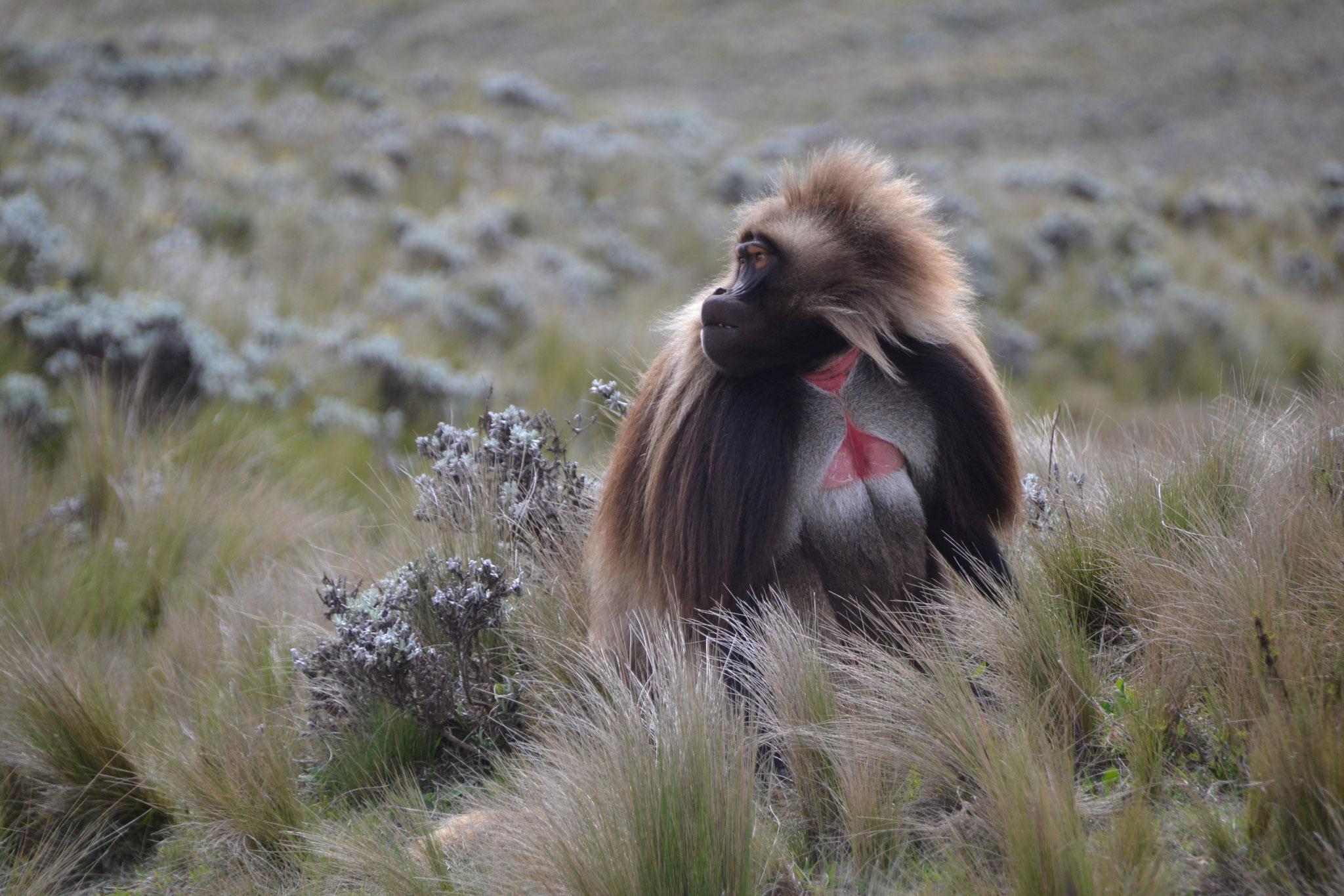 Guassa-Hochebene Äthiopien - Foto: Richard Petri