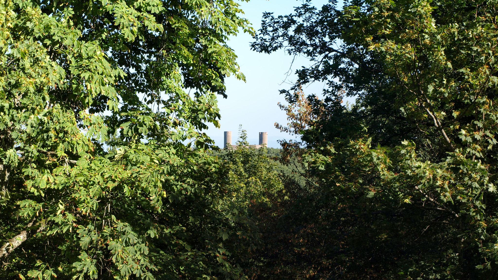 Haut-Andlau vu du Spesbourg
