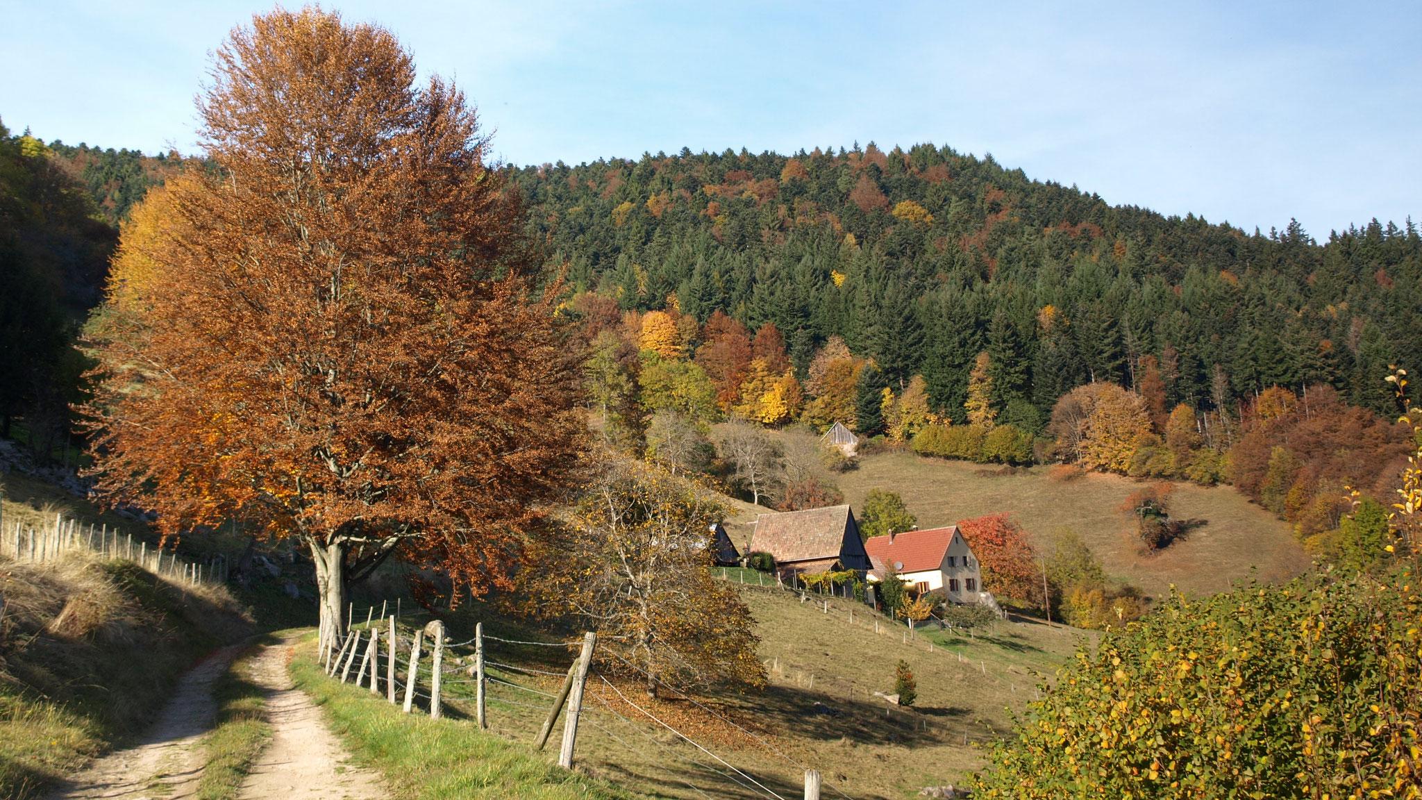 Wasserbourg