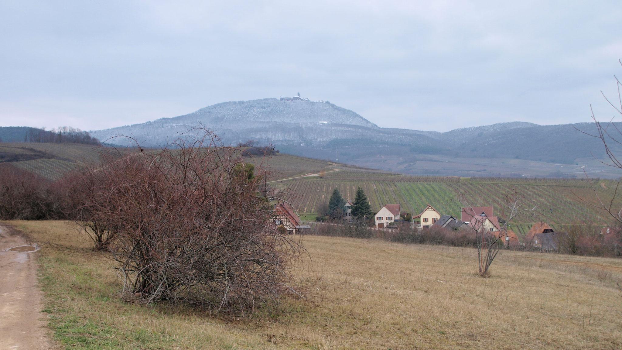 Haut-Koenigsbourg vu du Grasberg