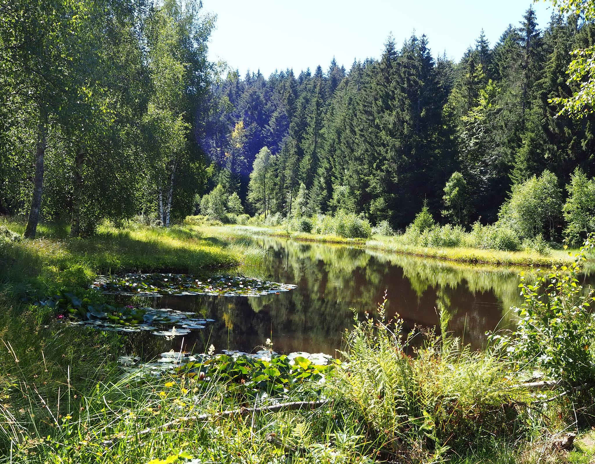 L'étang de Blancfaing