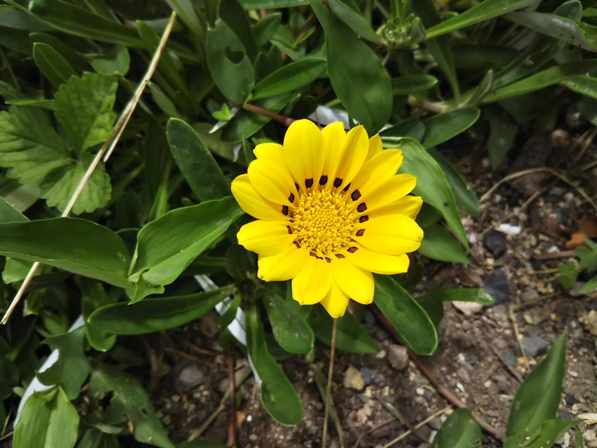 何の花でしょう?