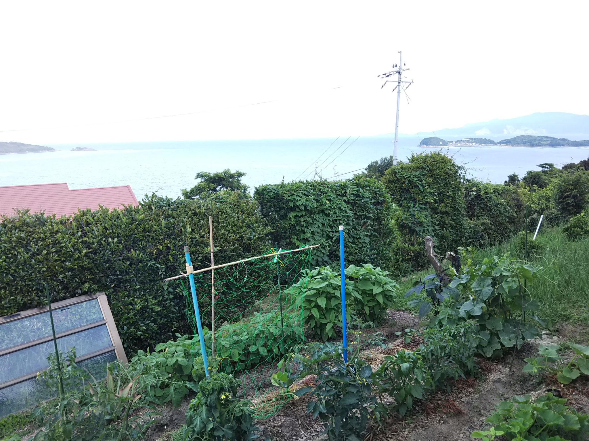 海が見える農園