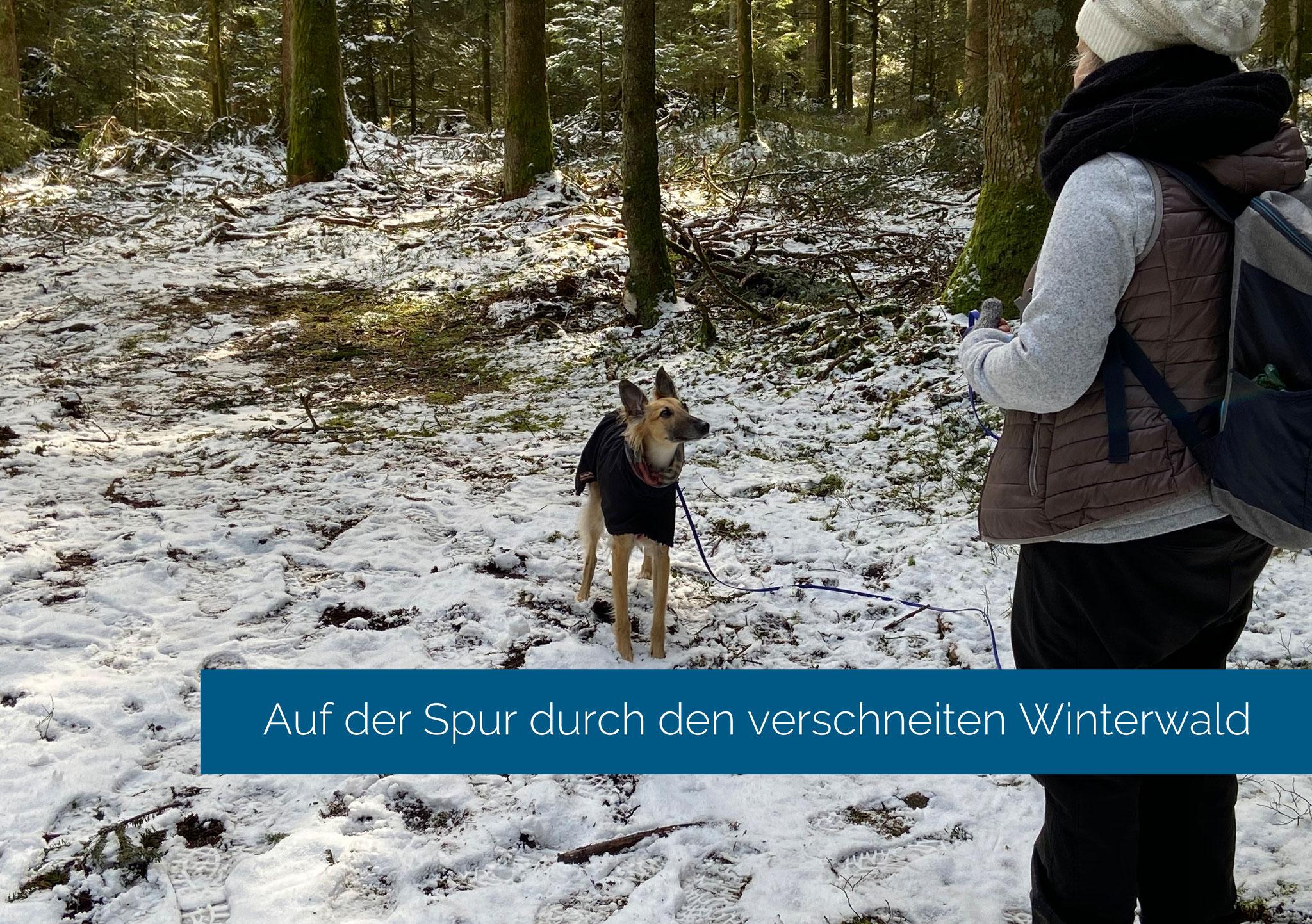 Auf der Spur durch den verschneiten Winterwald