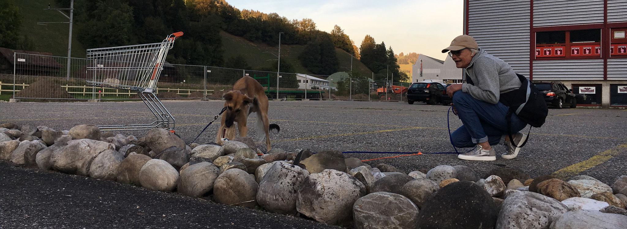 """Astrid mit ihrem Hund """"Yuki"""" (Langhaar Whippet)"""