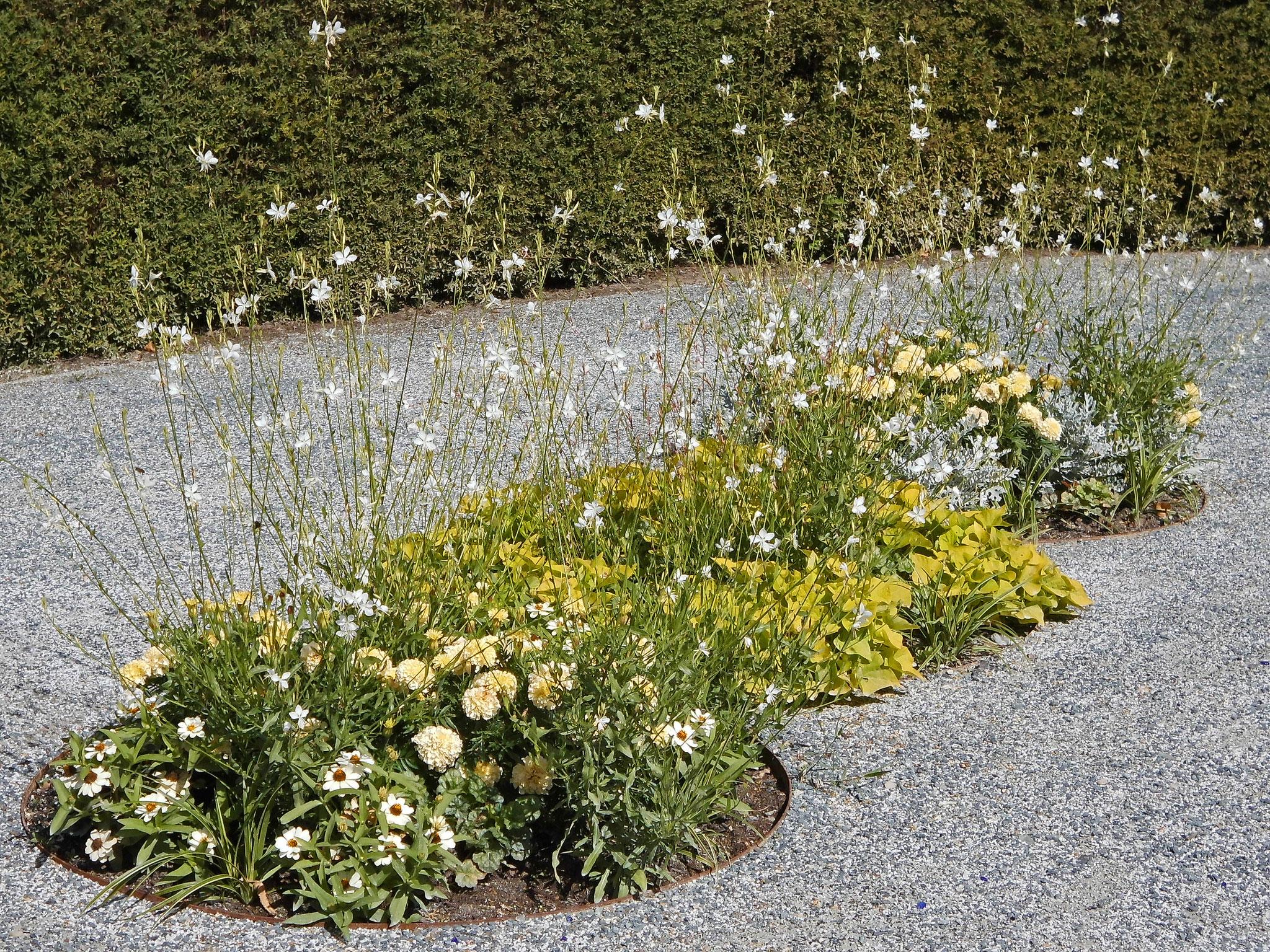 Wie gestalte ich einen Kiesgarten?