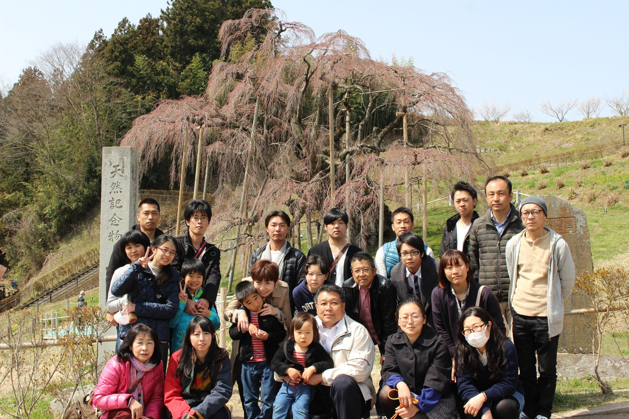 三春の滝桜前、先はじめでしたが迫力がありました。