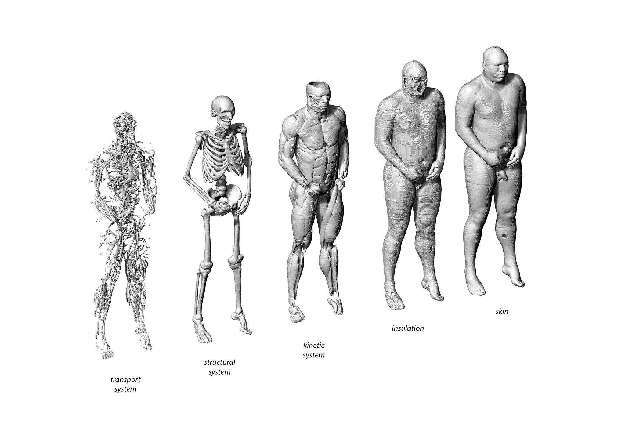 human geometry