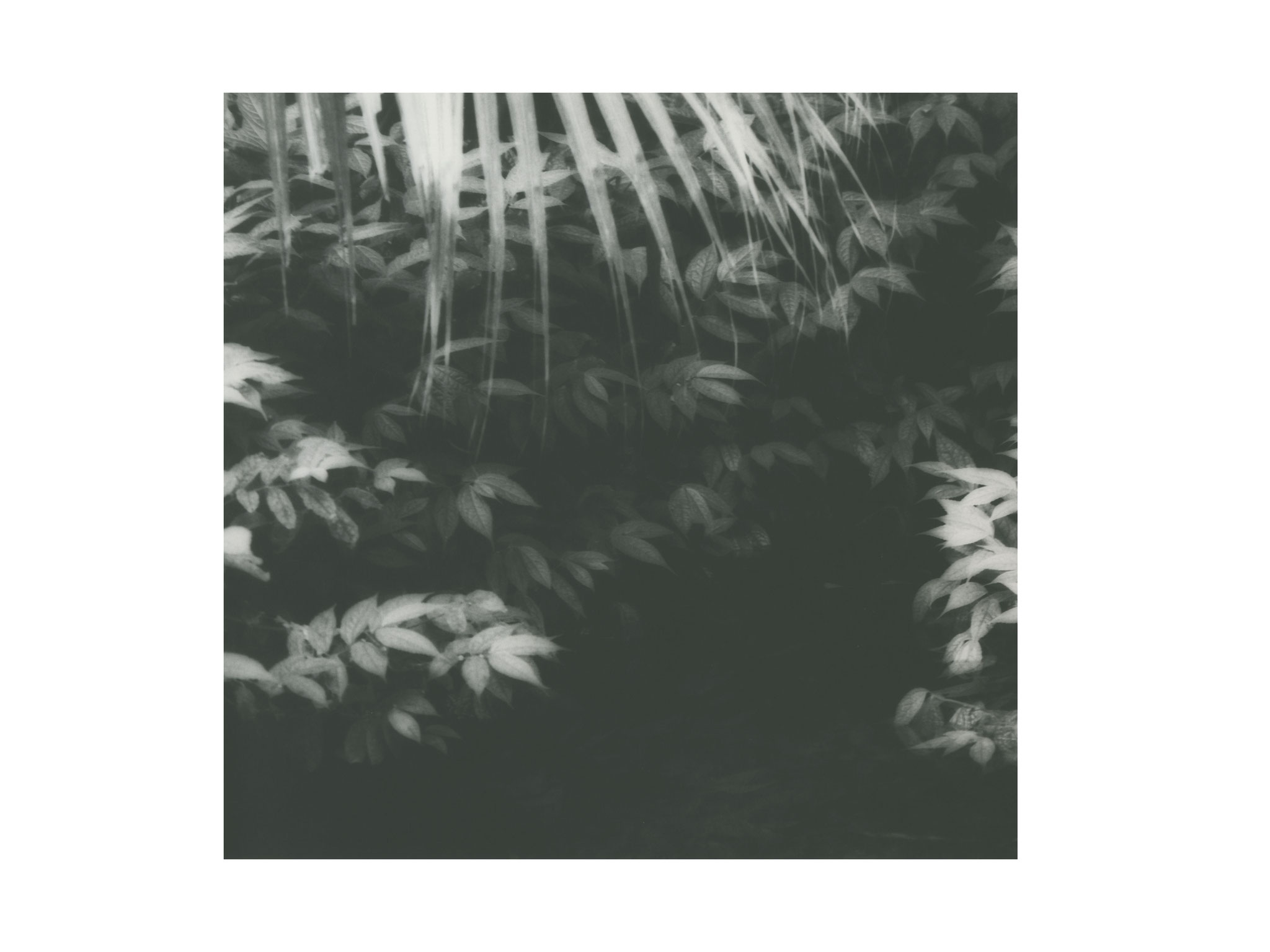 Palmengarten 7