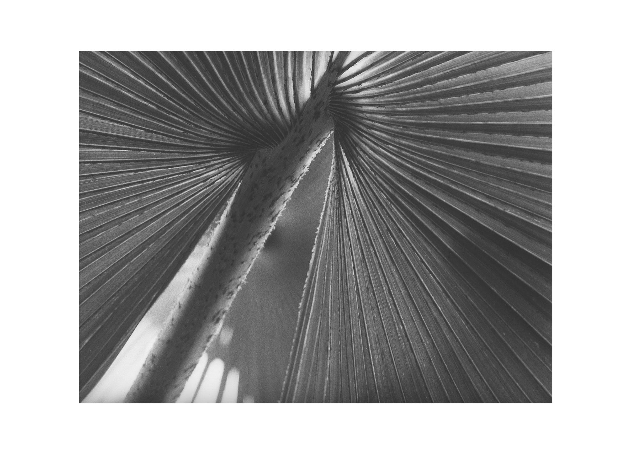 Palmengarten 1