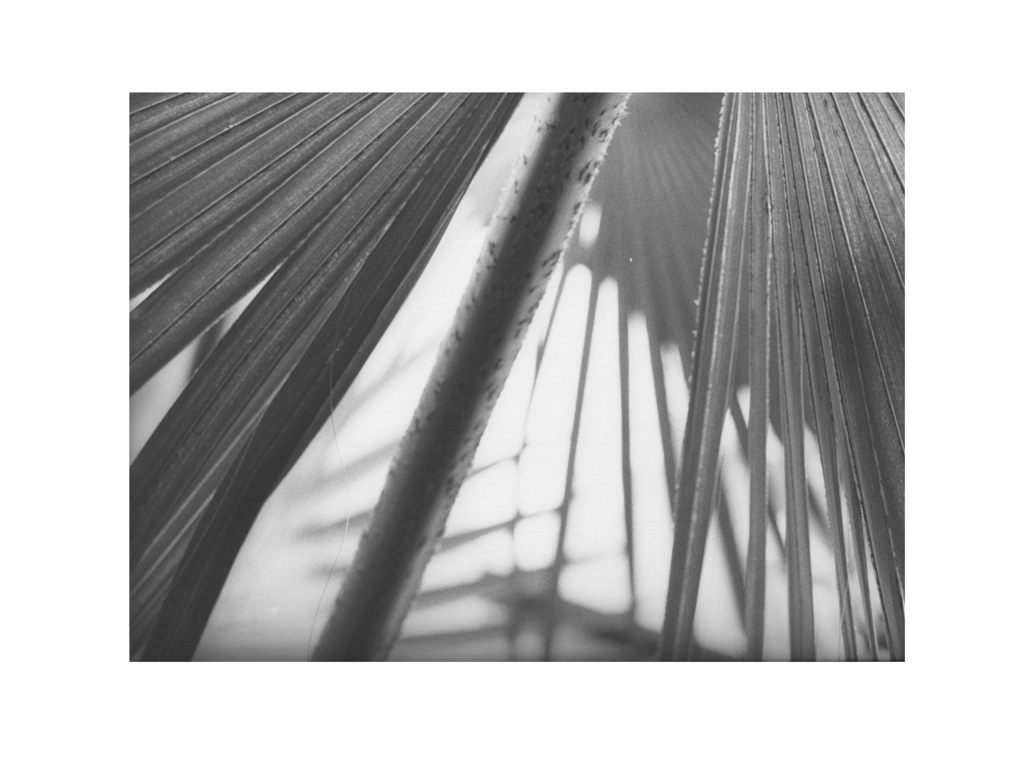Palmengarten 2