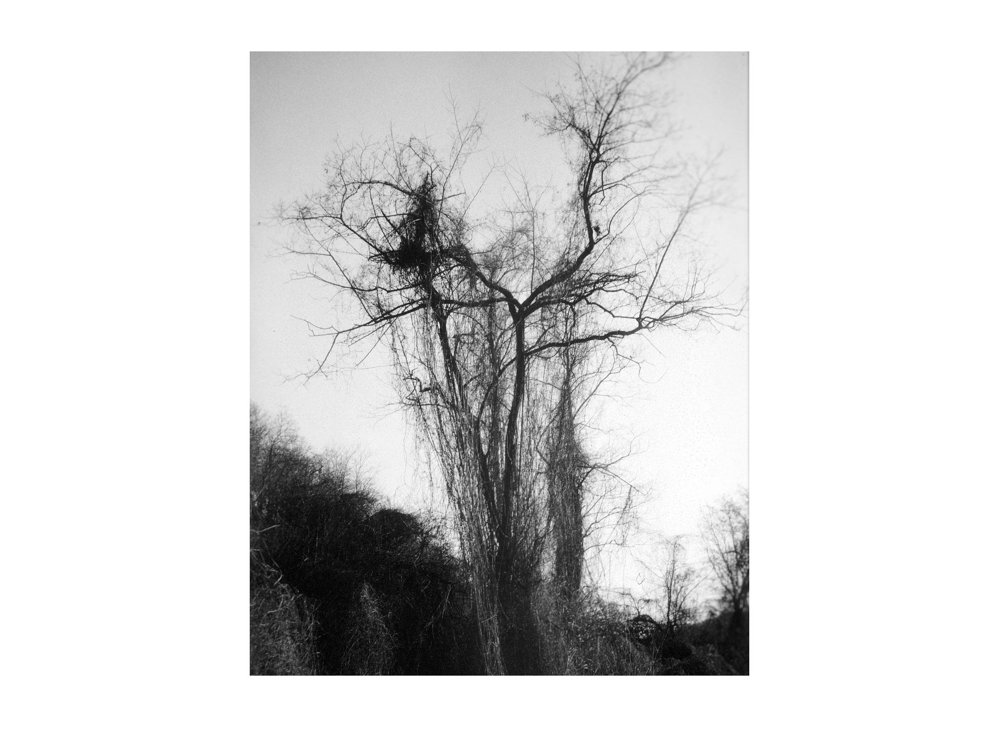 Der umschlungene Baum 1