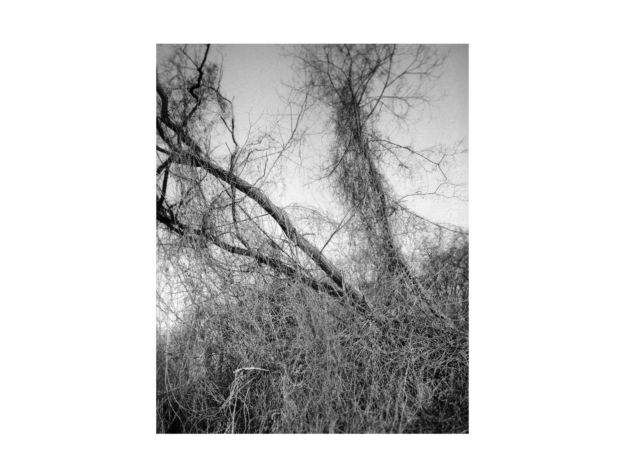 Der umschlungene Baum 4