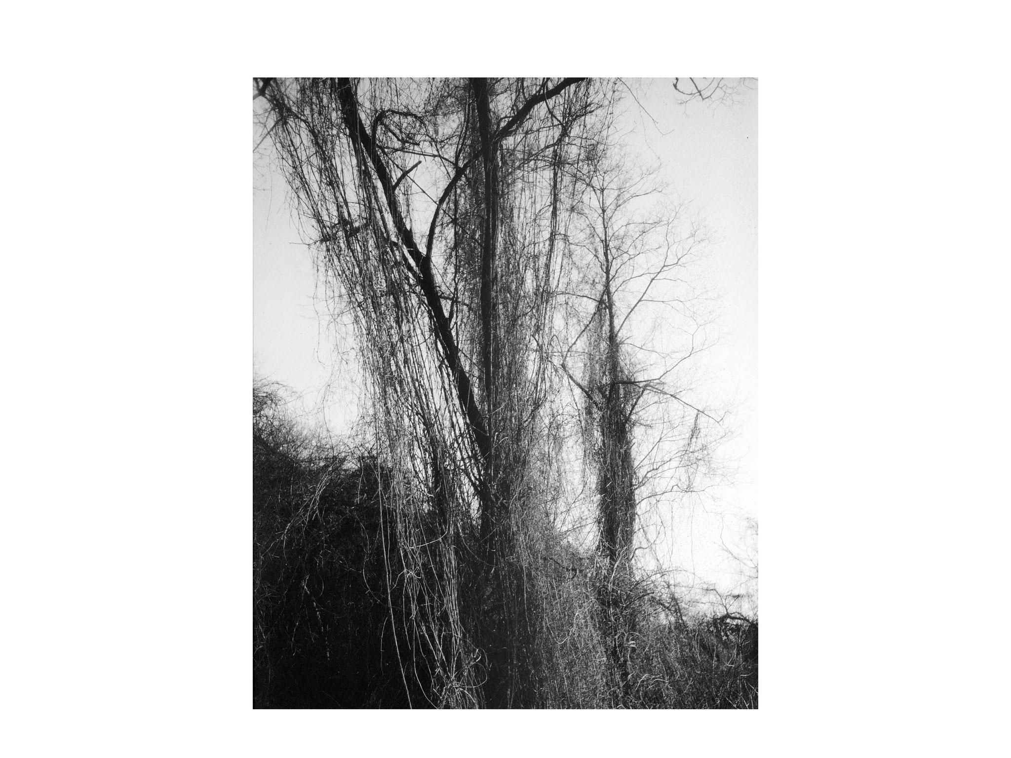 Der umschlungene Baum 2
