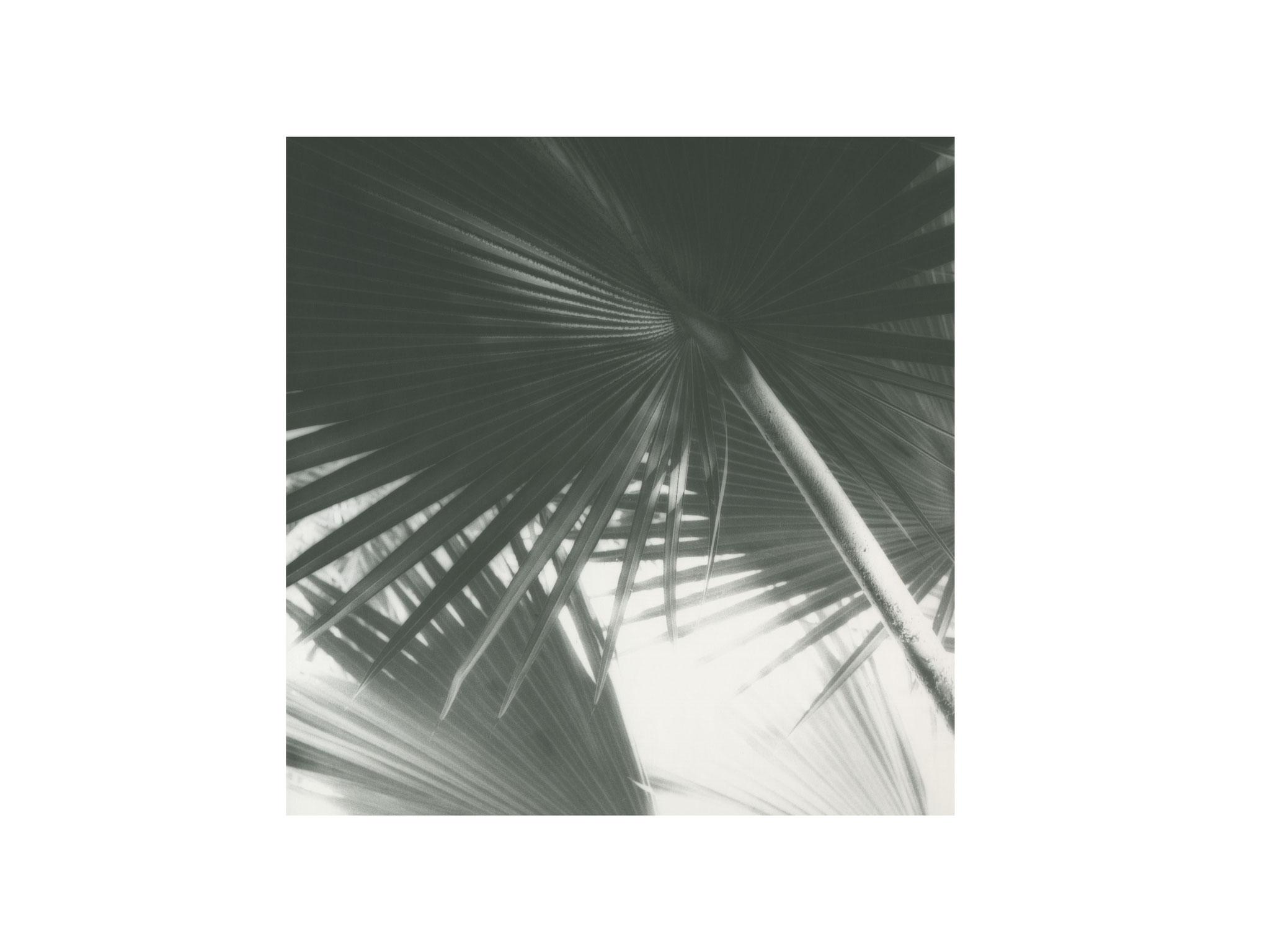 Palmengarten 6