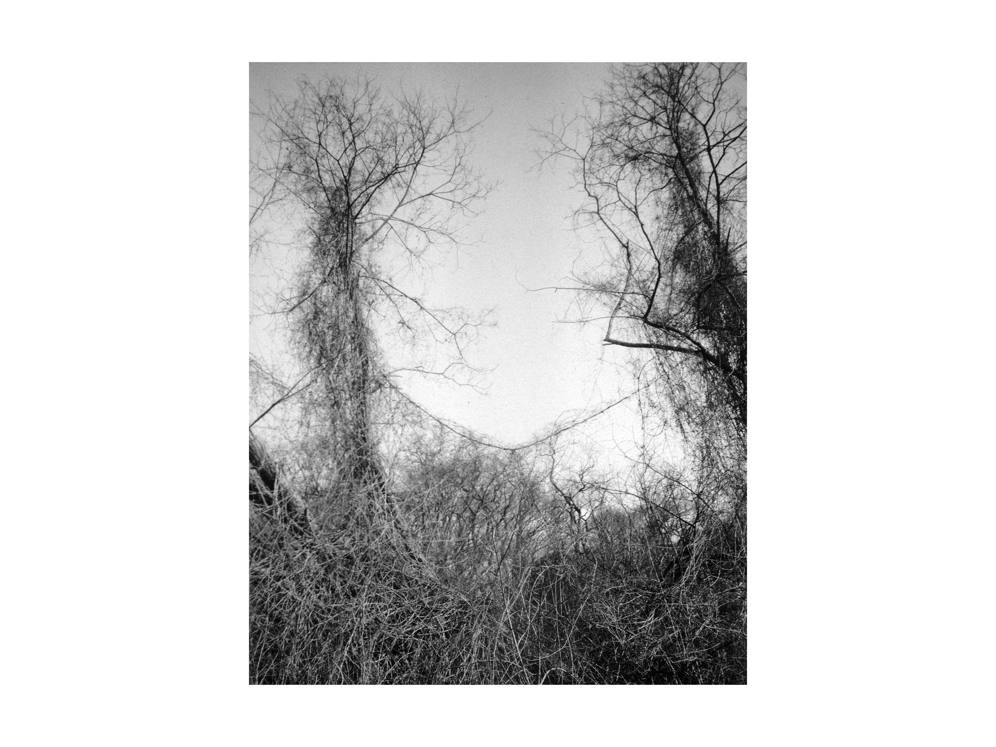 Der umschlungene Baum 3