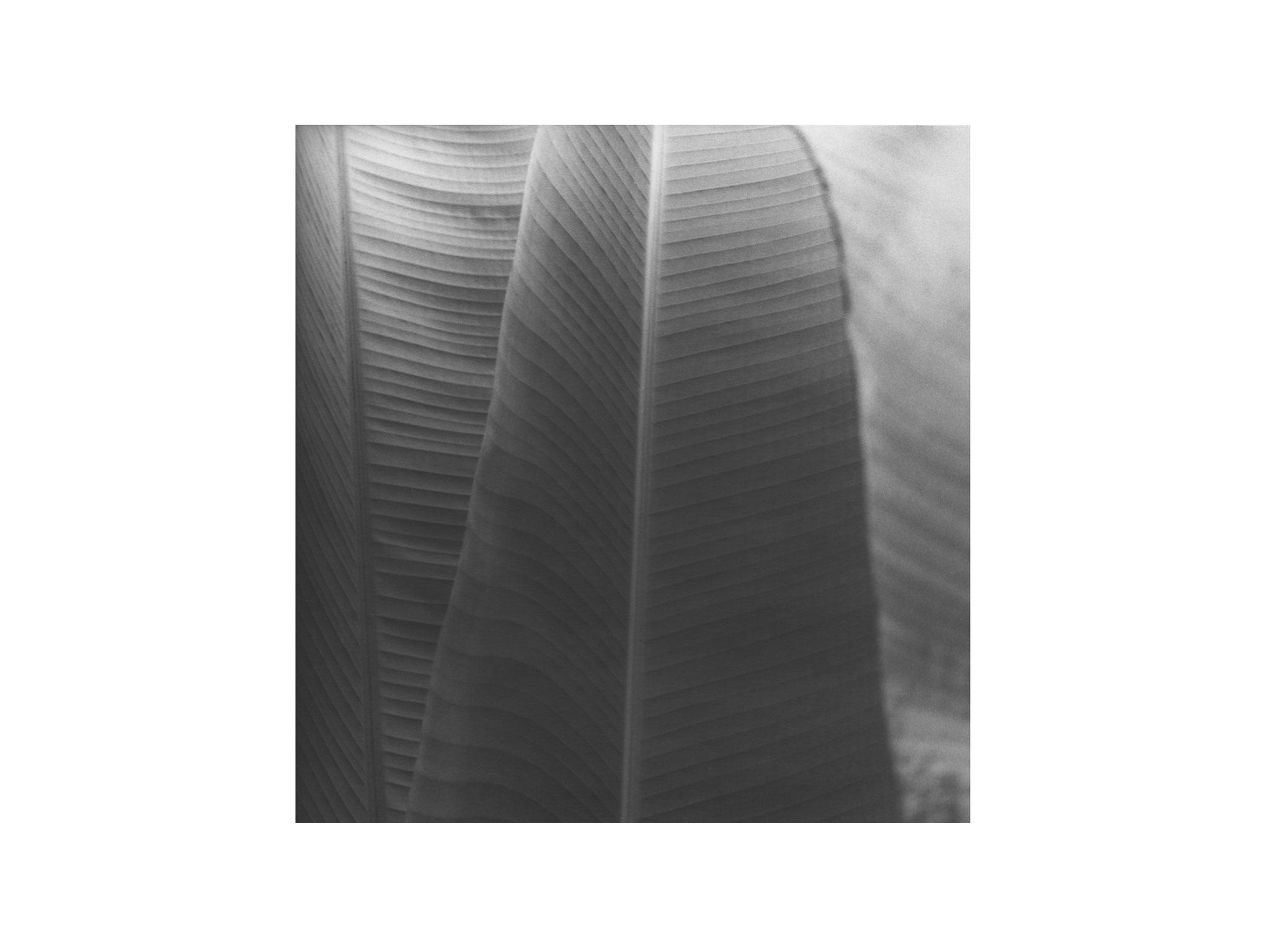 Palmengarten 5