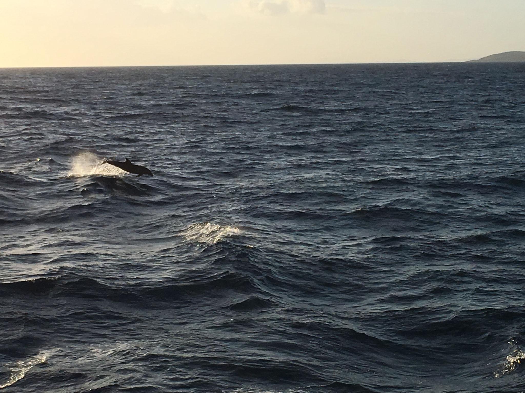 Et des dauphins