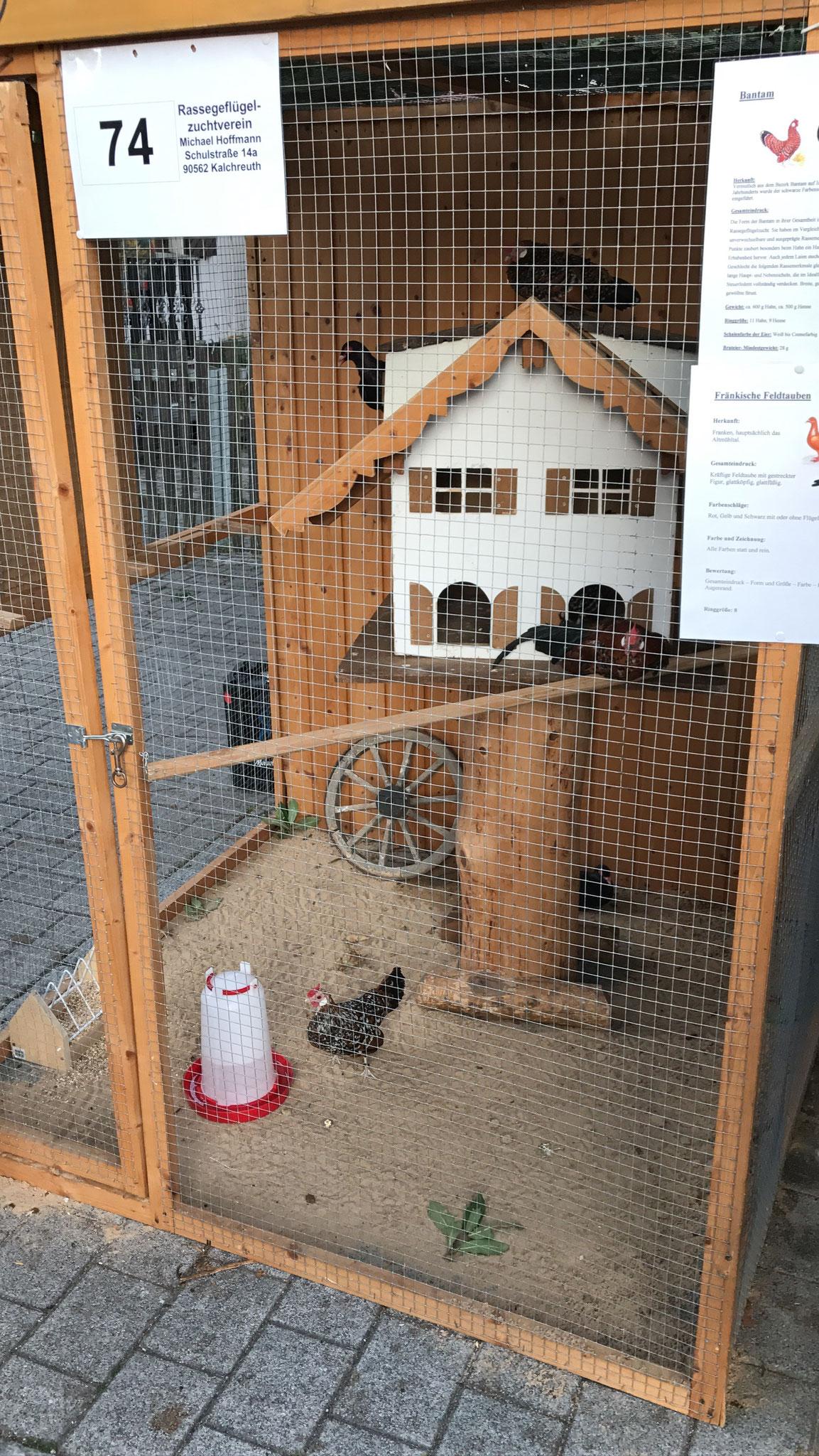 Eine kleine Schauvoliere mit Hühnern & Tauben