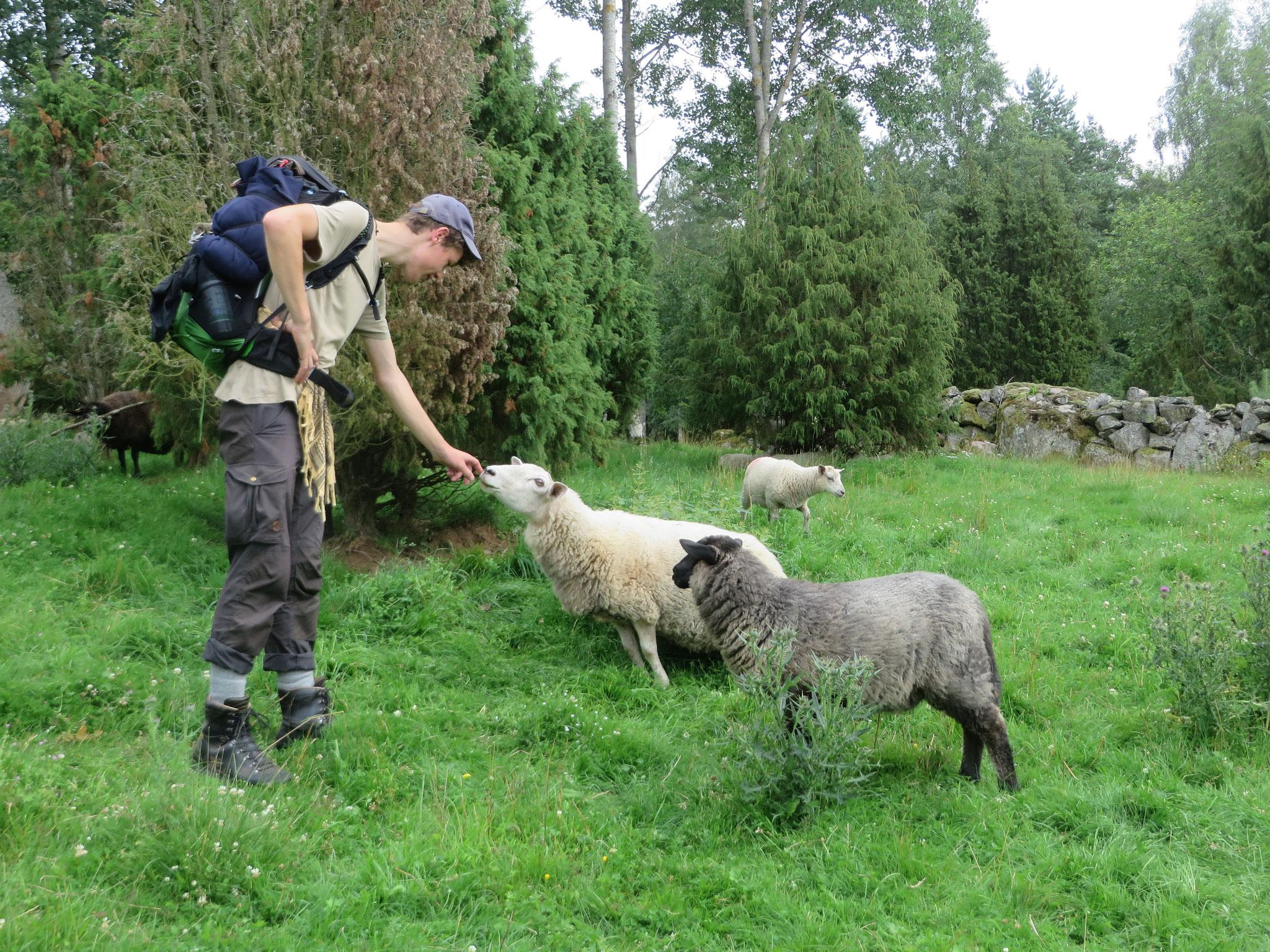 Schafe sind wunderbar...