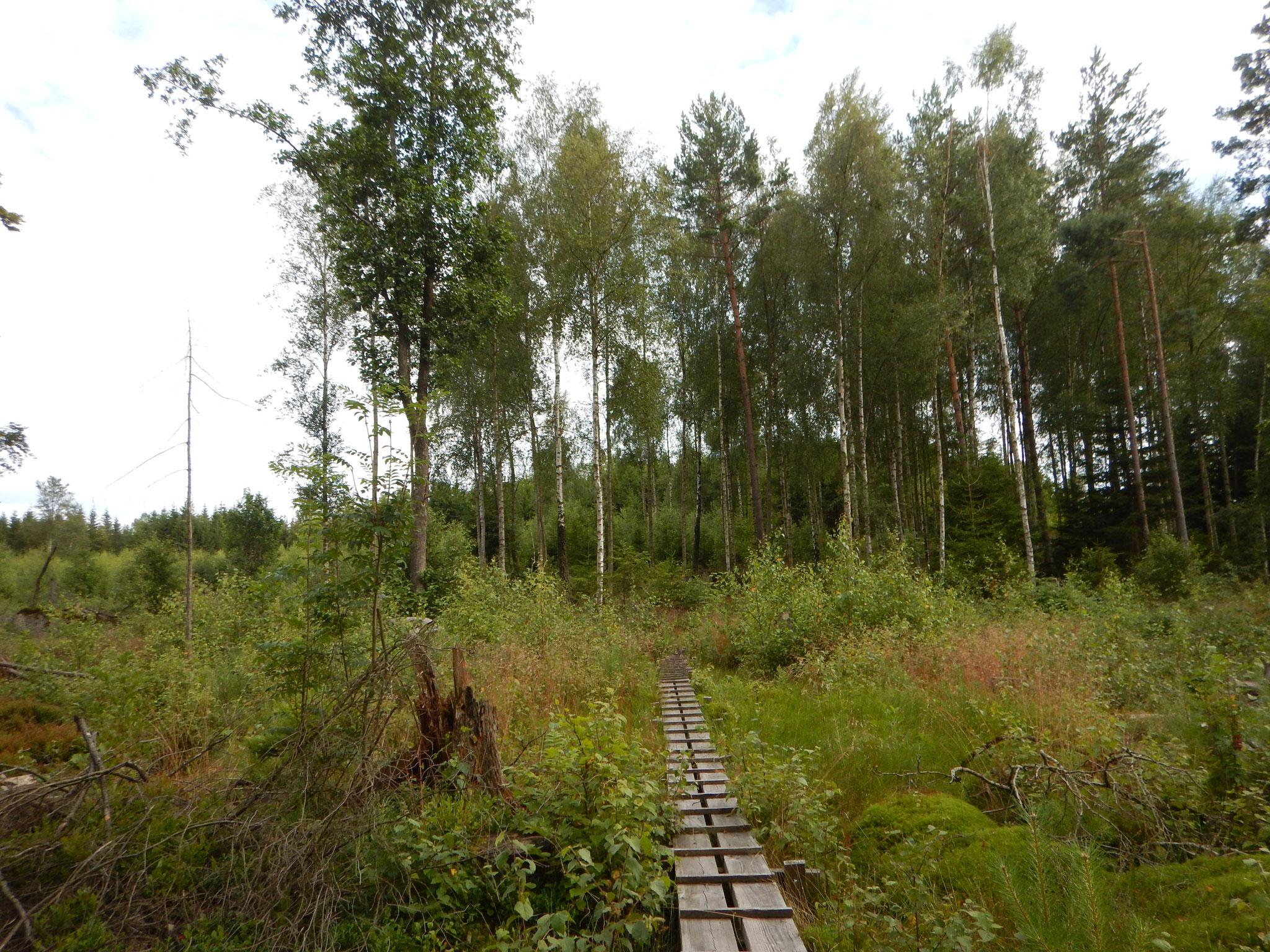 Schöne Landschaft+tolle Wege= Wanderglück