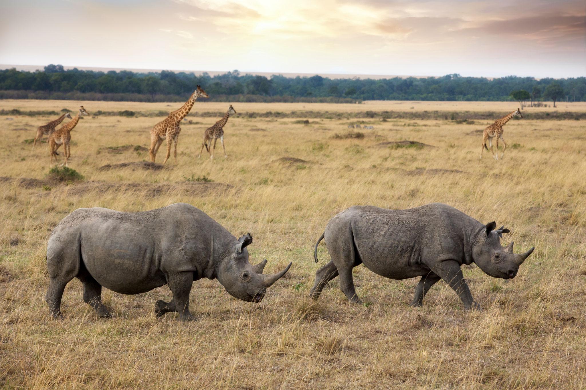 Jambo Masai Mara - Neptune Safaris
