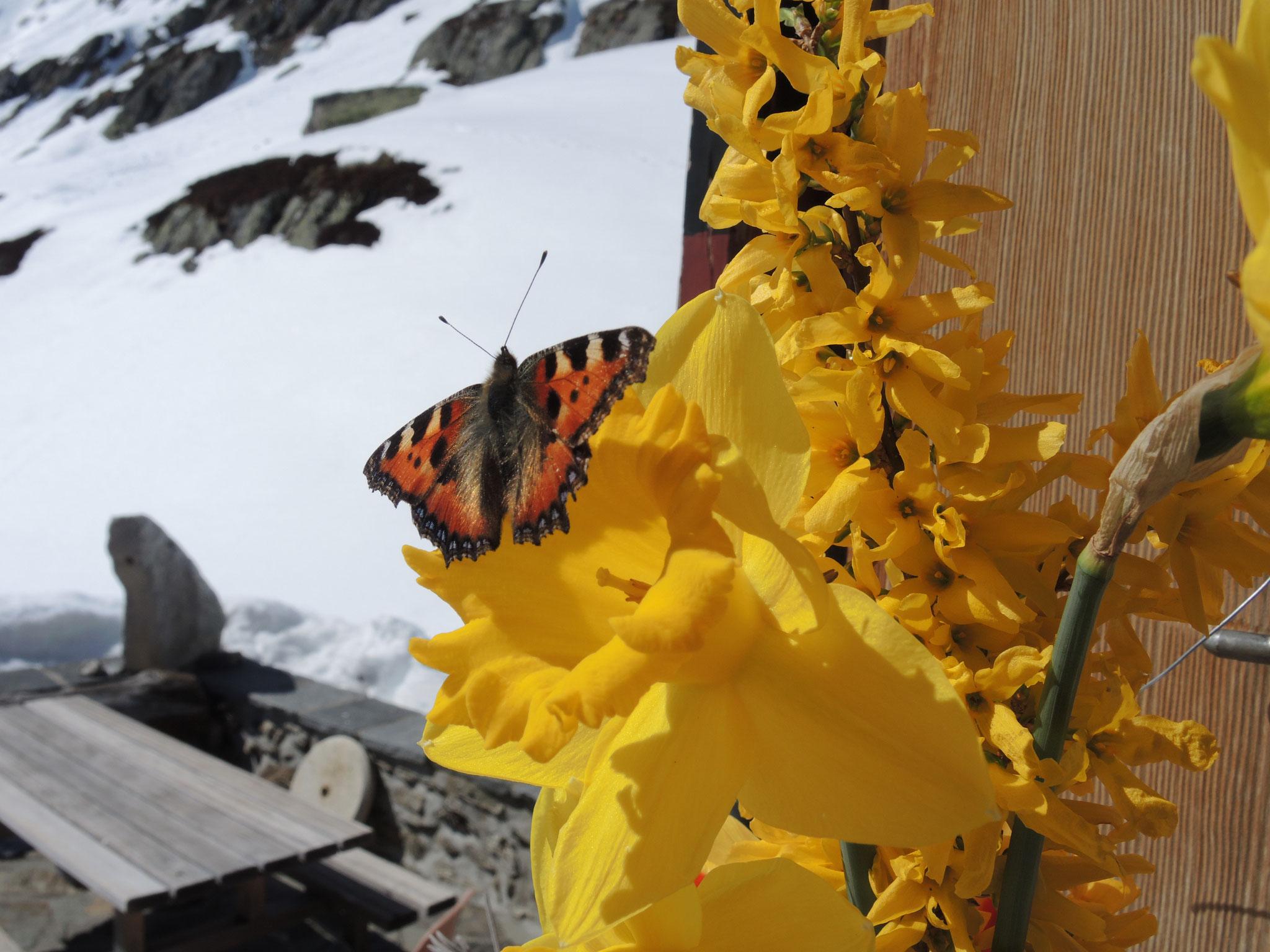 ... 13: Frühling im Gauli
