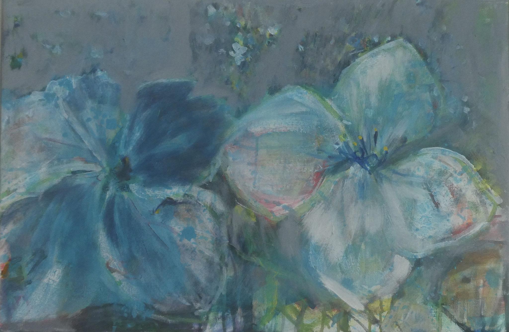 Hortensien 13,  40x60,  acrylic on canvas