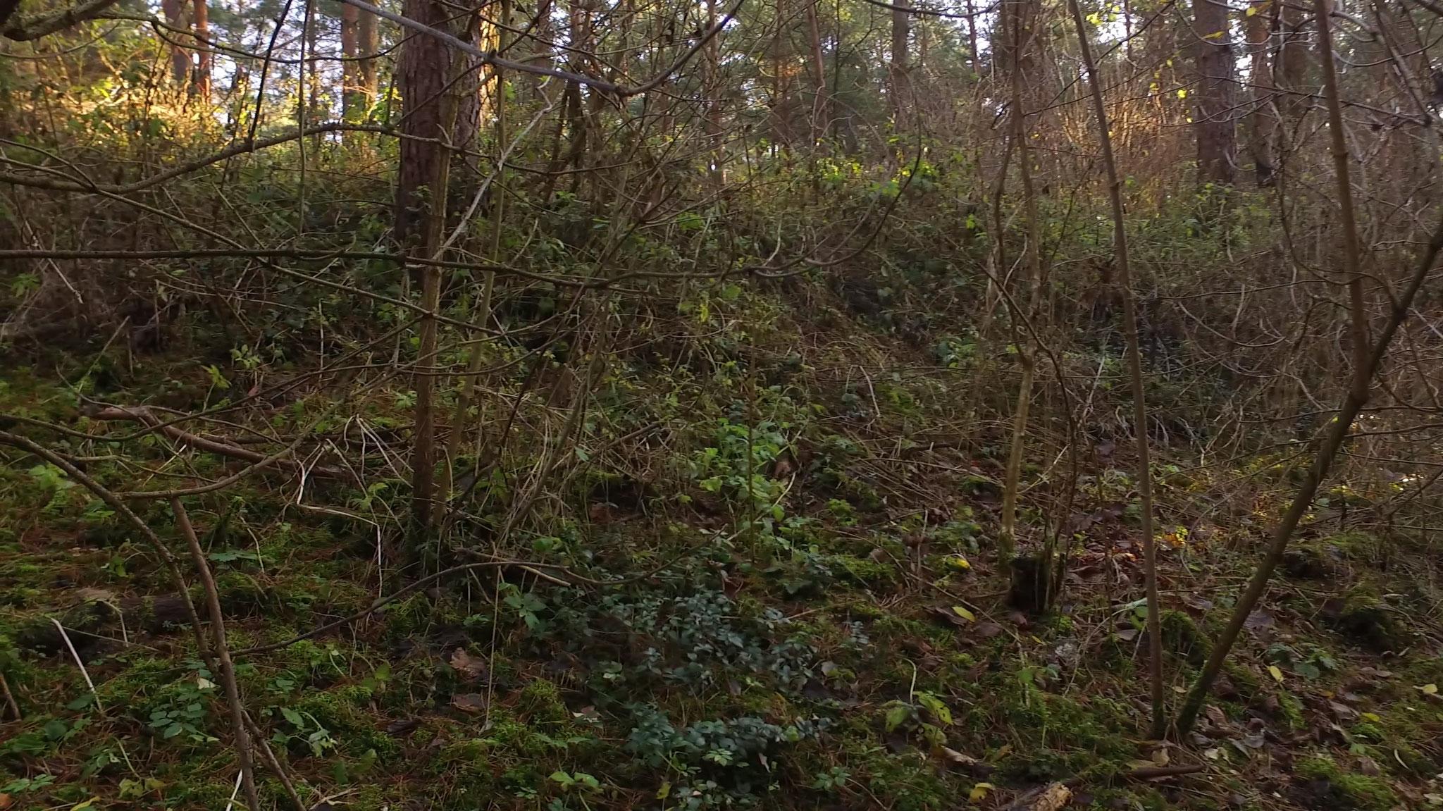 Blick vom Graben aufs Plateau