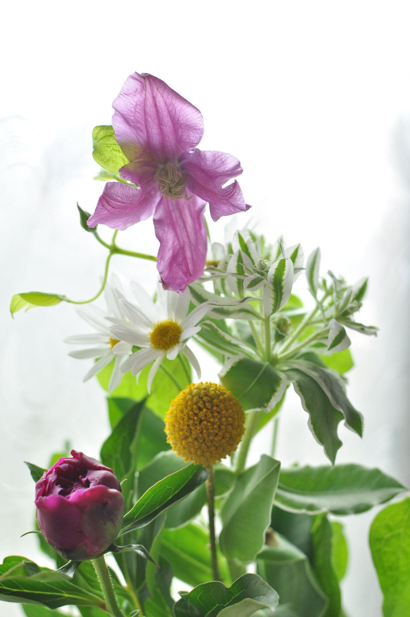 日常のお花を宅配します 草花宅配