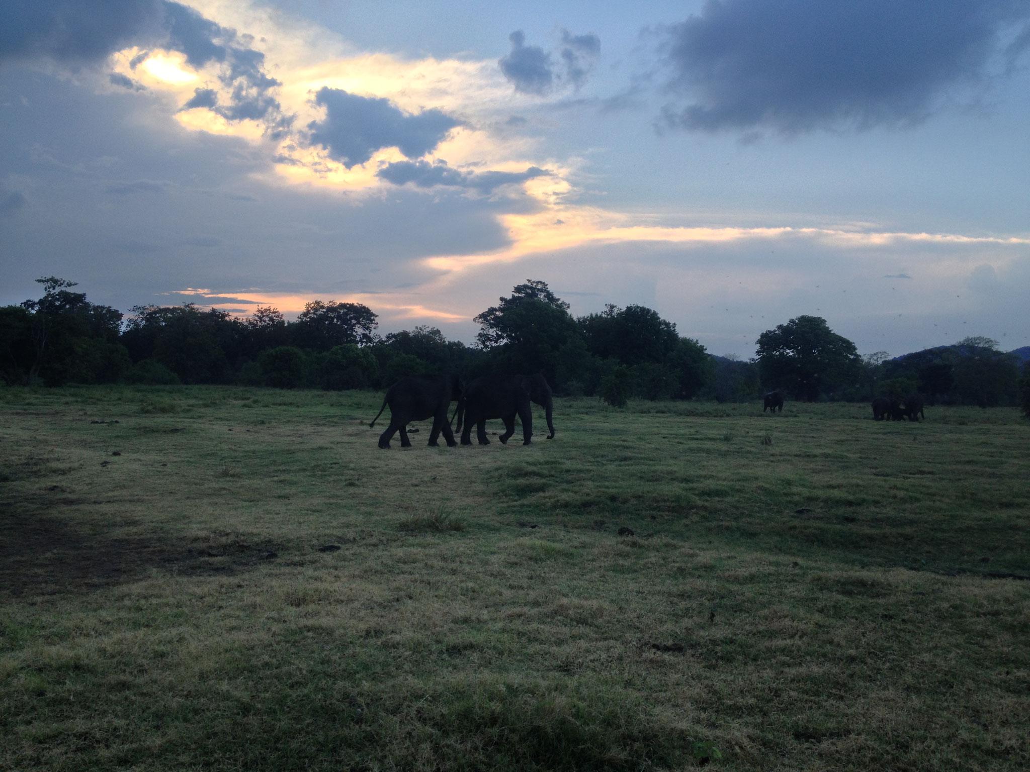 Elefanten im ...