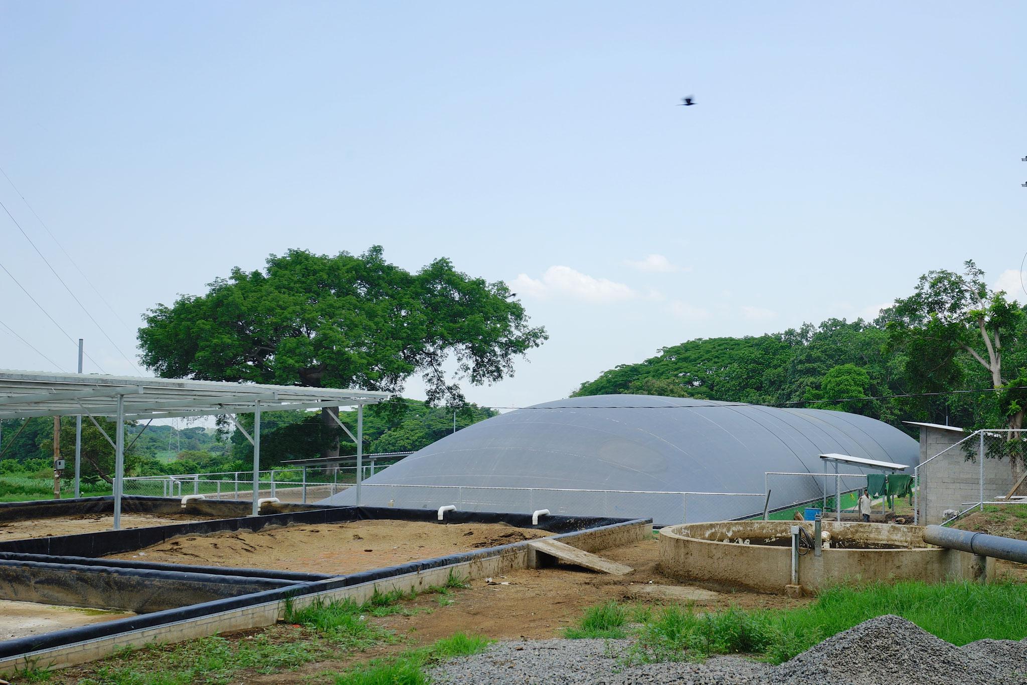 Biodigestor para estiércol de ganado lechero