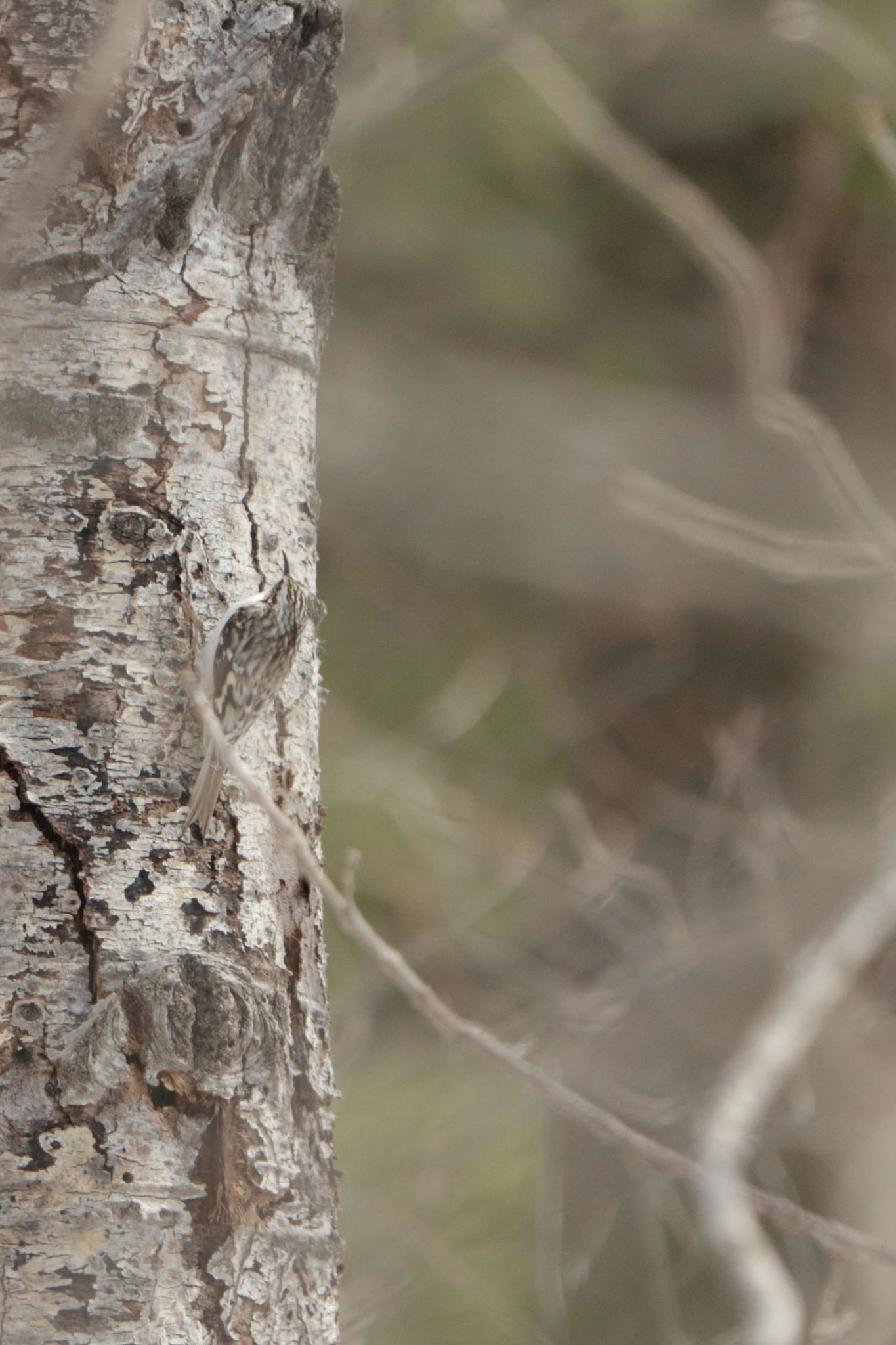West Rutland Marsh, VT, USA. Canon EOS 80D, EF 70-300mm f/4-5.6 IS II USM à 300mm, f/5,6, 1/400 s, 1000 ISO