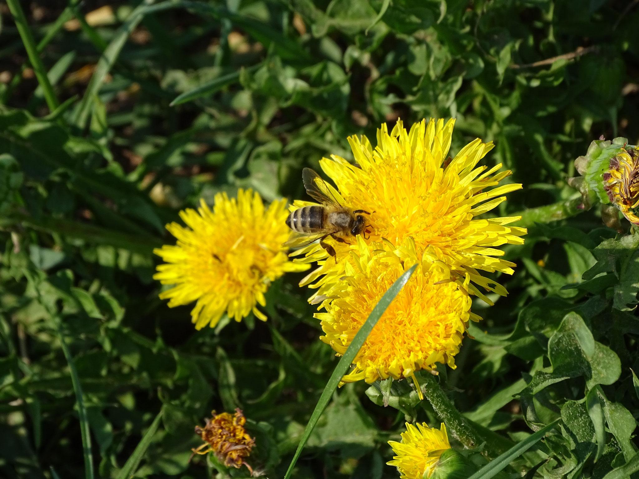 Umweltschutz & Biodiversität