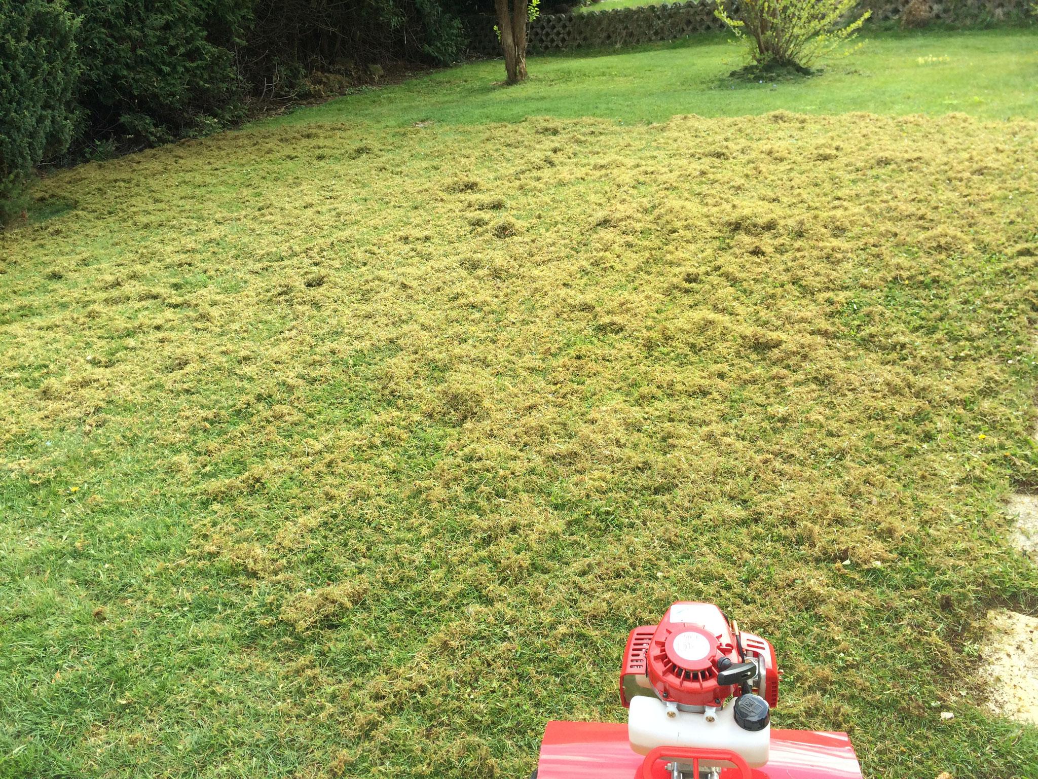 Rasen vertikutiert - Moos muss nun entfernt werden