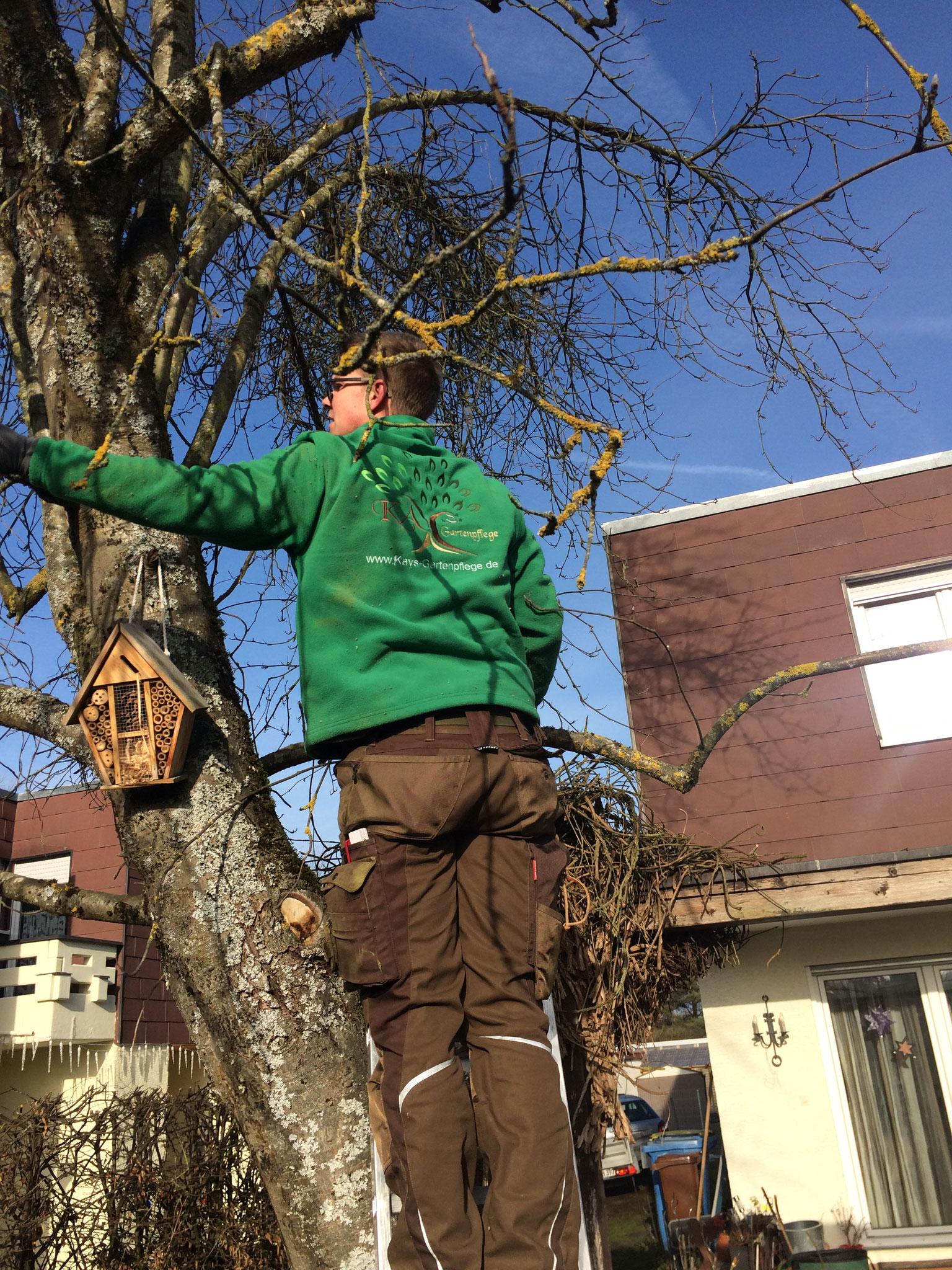 Alte Kletterpflanze aus dem Baum entfernen II